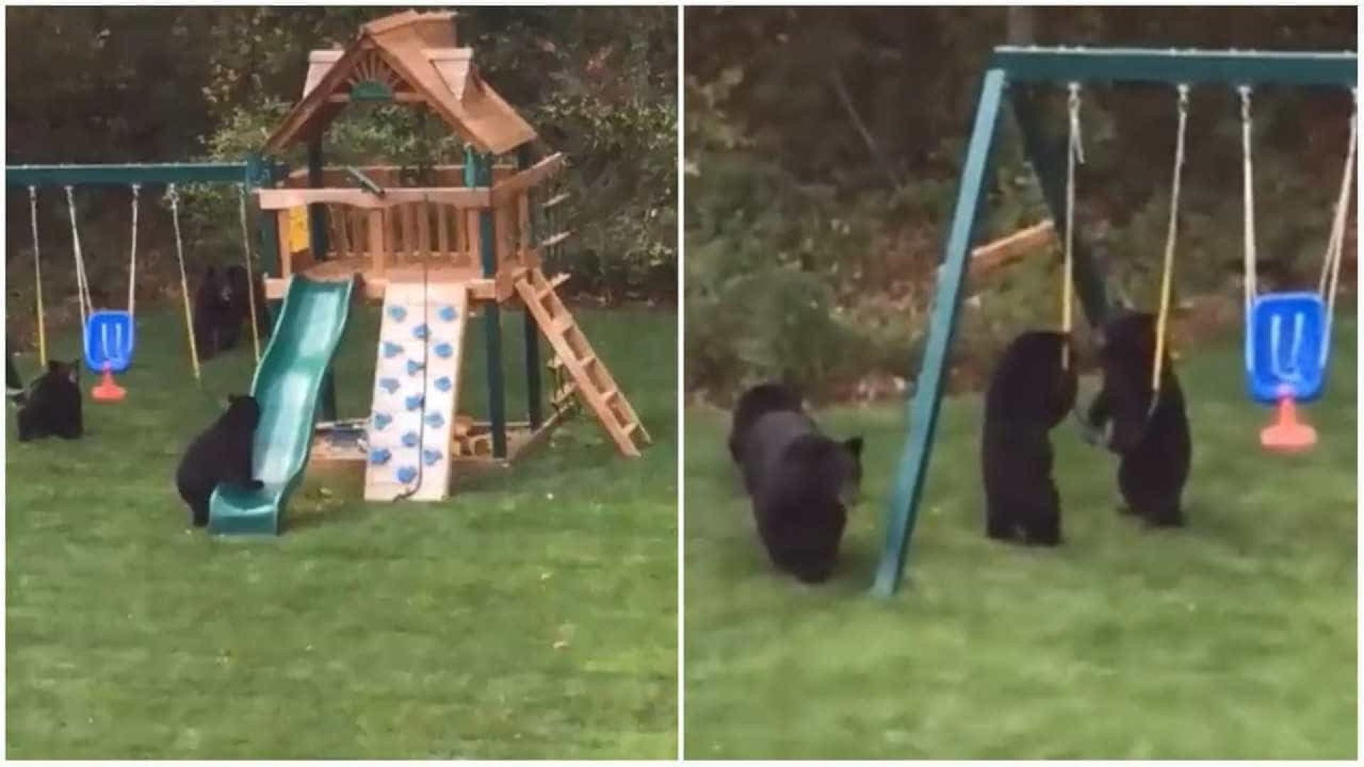Filhotes de urso invadem parque infantil nos EUA