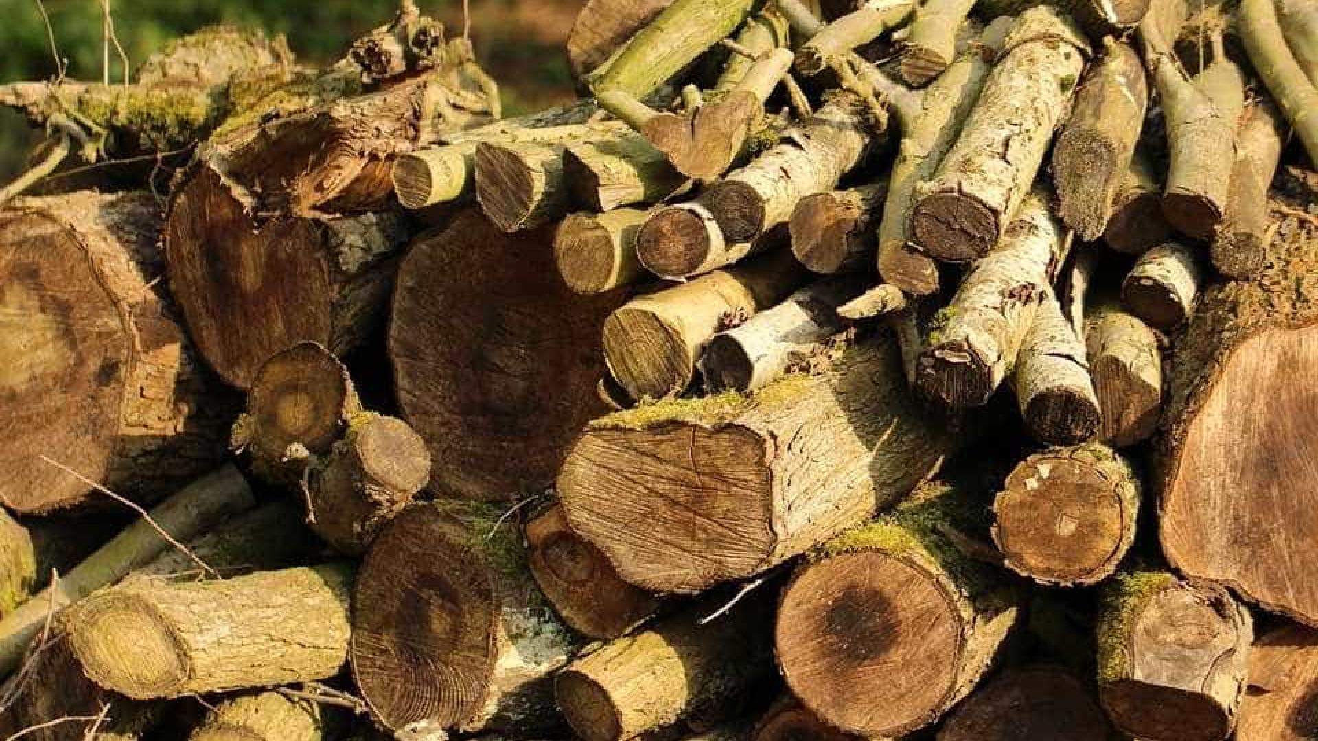 Mata Atlântica perde 13 mil hectares de floresta nativa entre 2019 e 2020, diz relatório