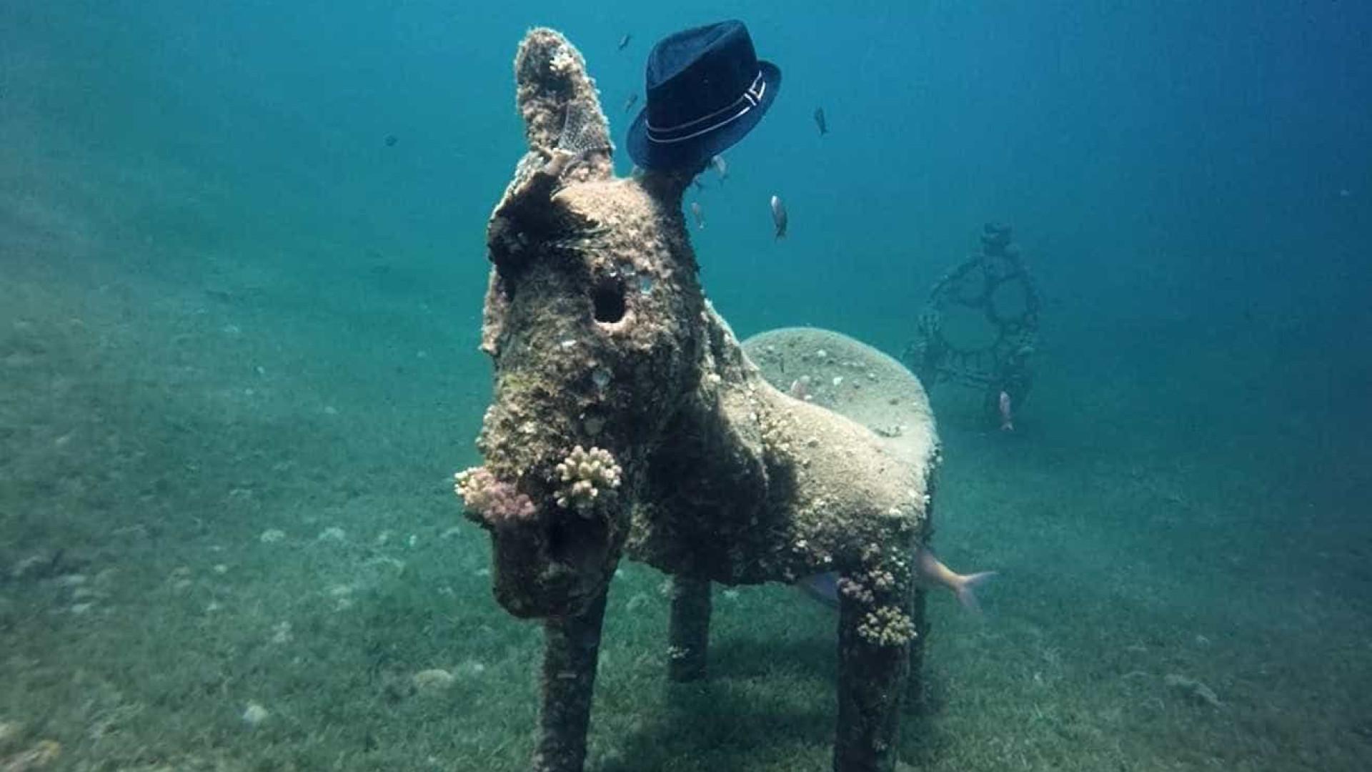 Escultura de burro é encontrada no fundo do Mar Vermelho