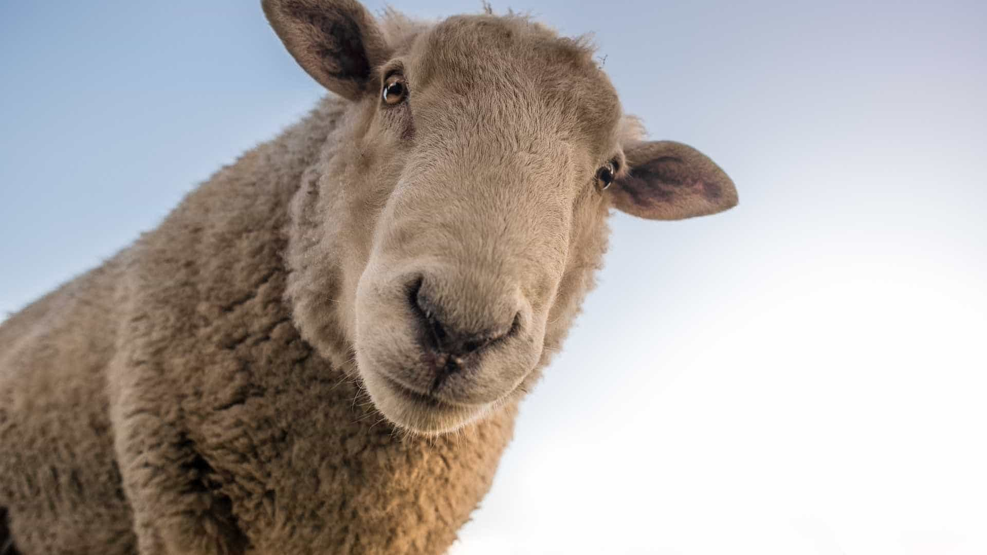5 de julho: Segunda Guerra Mundial e a ovelha Dolly marcaram a data