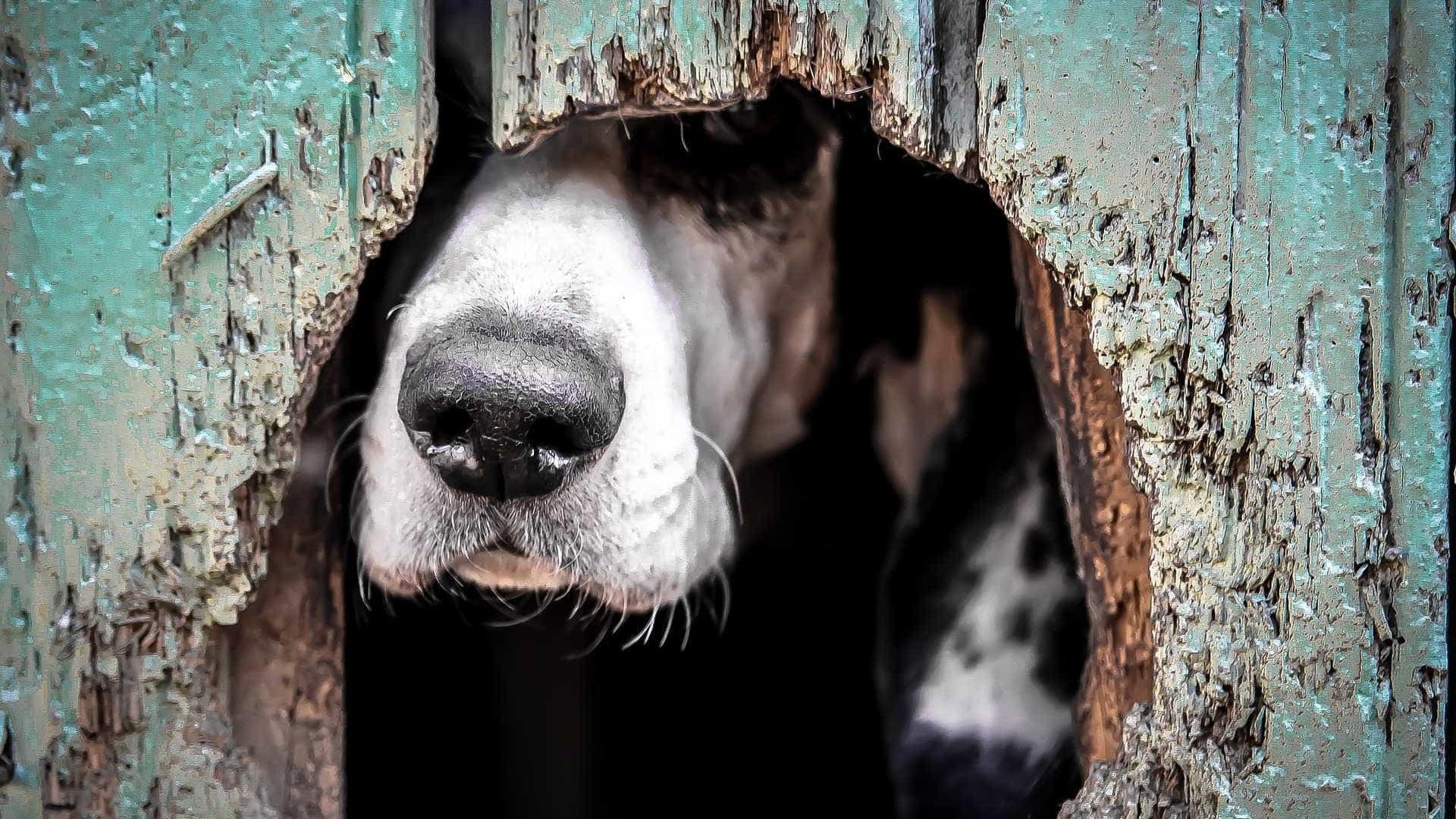 Política pública transforma a Holanda no 1º país sem cães abandonados