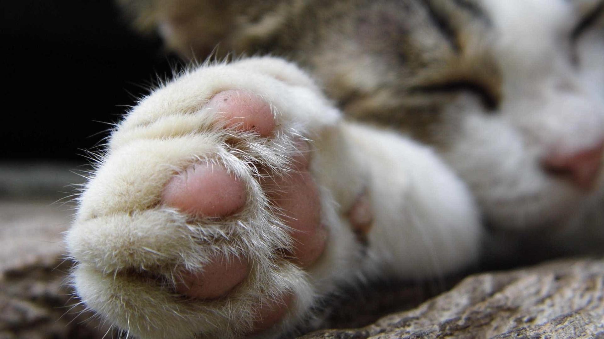 Dezenas de gatos encontrados mortos em habitação após despejo nos EUA