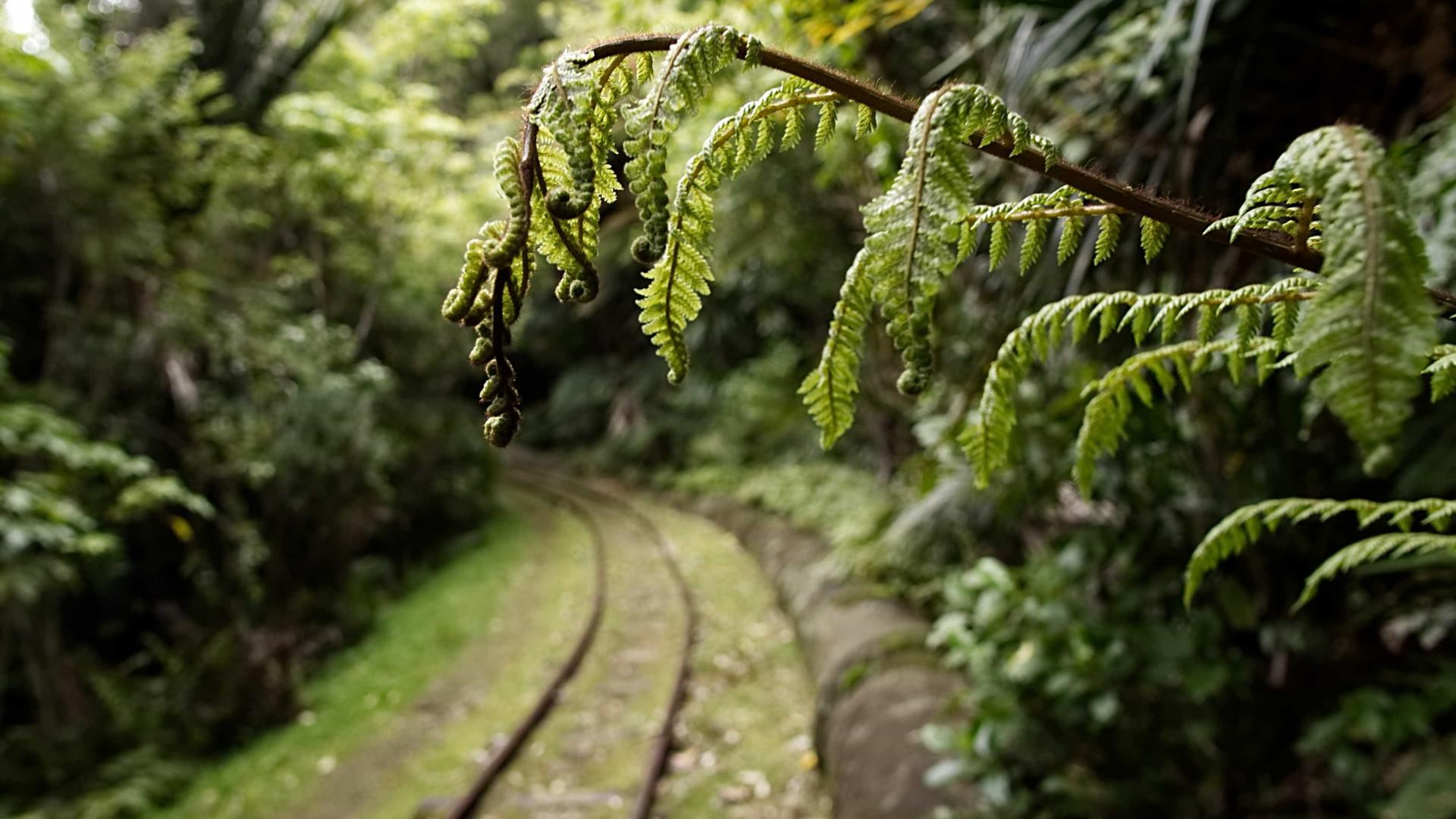 Moradores encontram corpo carbonizado em trilha em Florianópolis