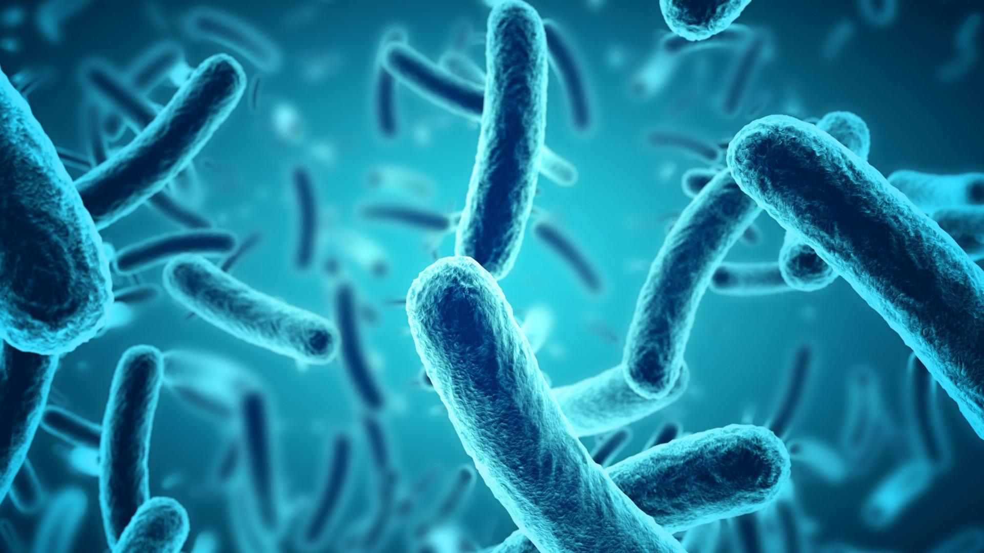 Bactérias que produzem eletricidade podem ser usadas na tecnologia