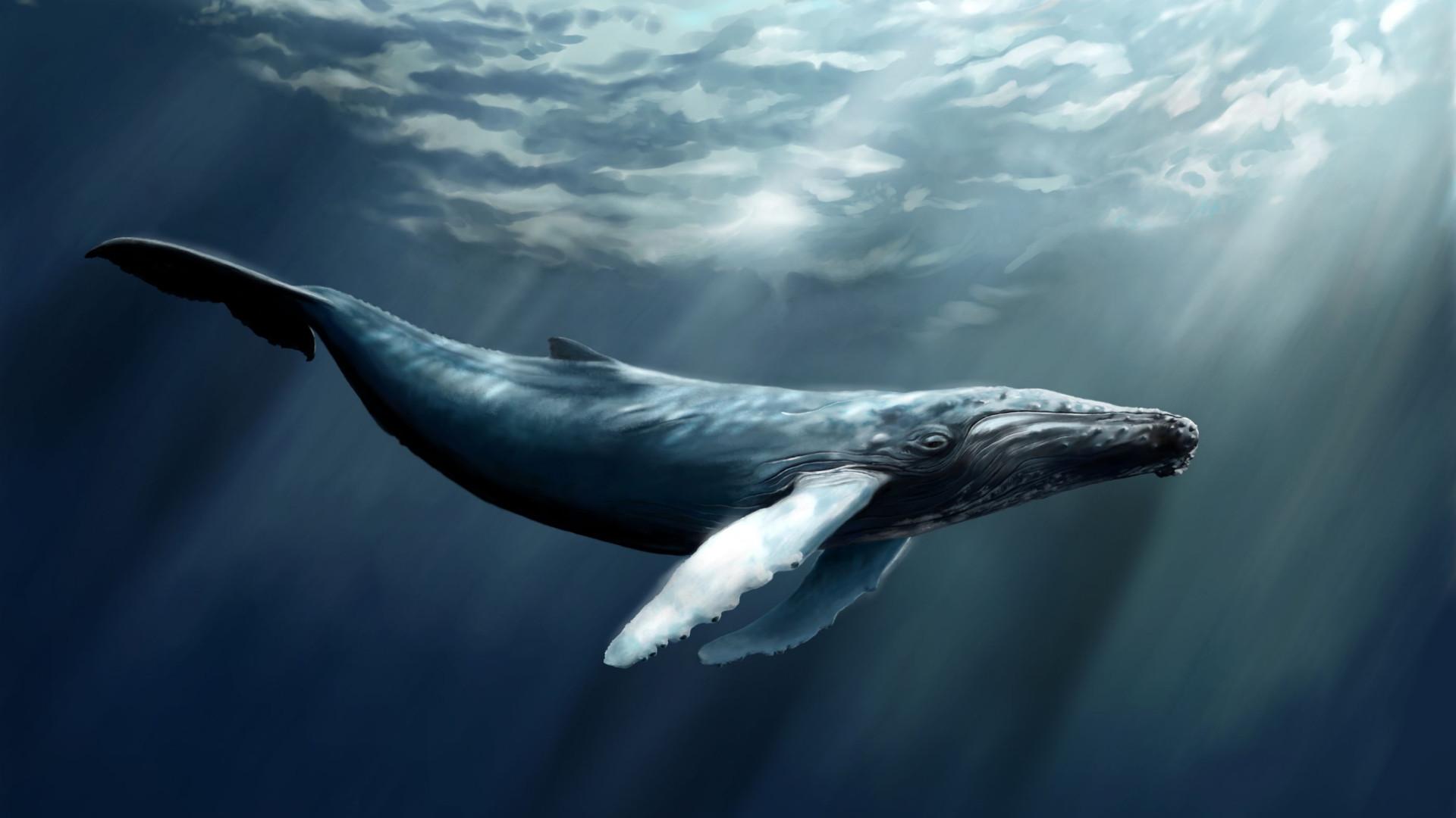 Fóssil de baleia de 4 patas com 42 milhões de anos é encontrado no Peru