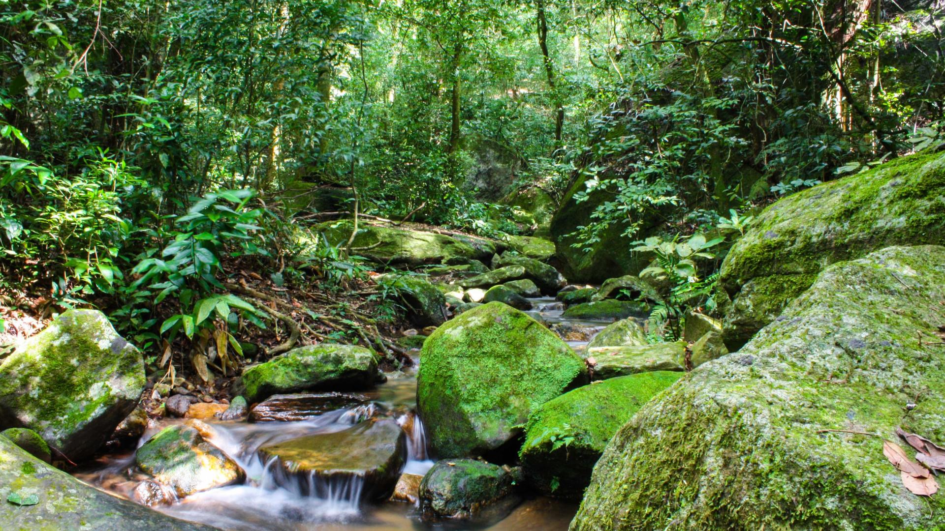 Mais de 25 mil espécies da flora só existem no Brasil, mostra estudo