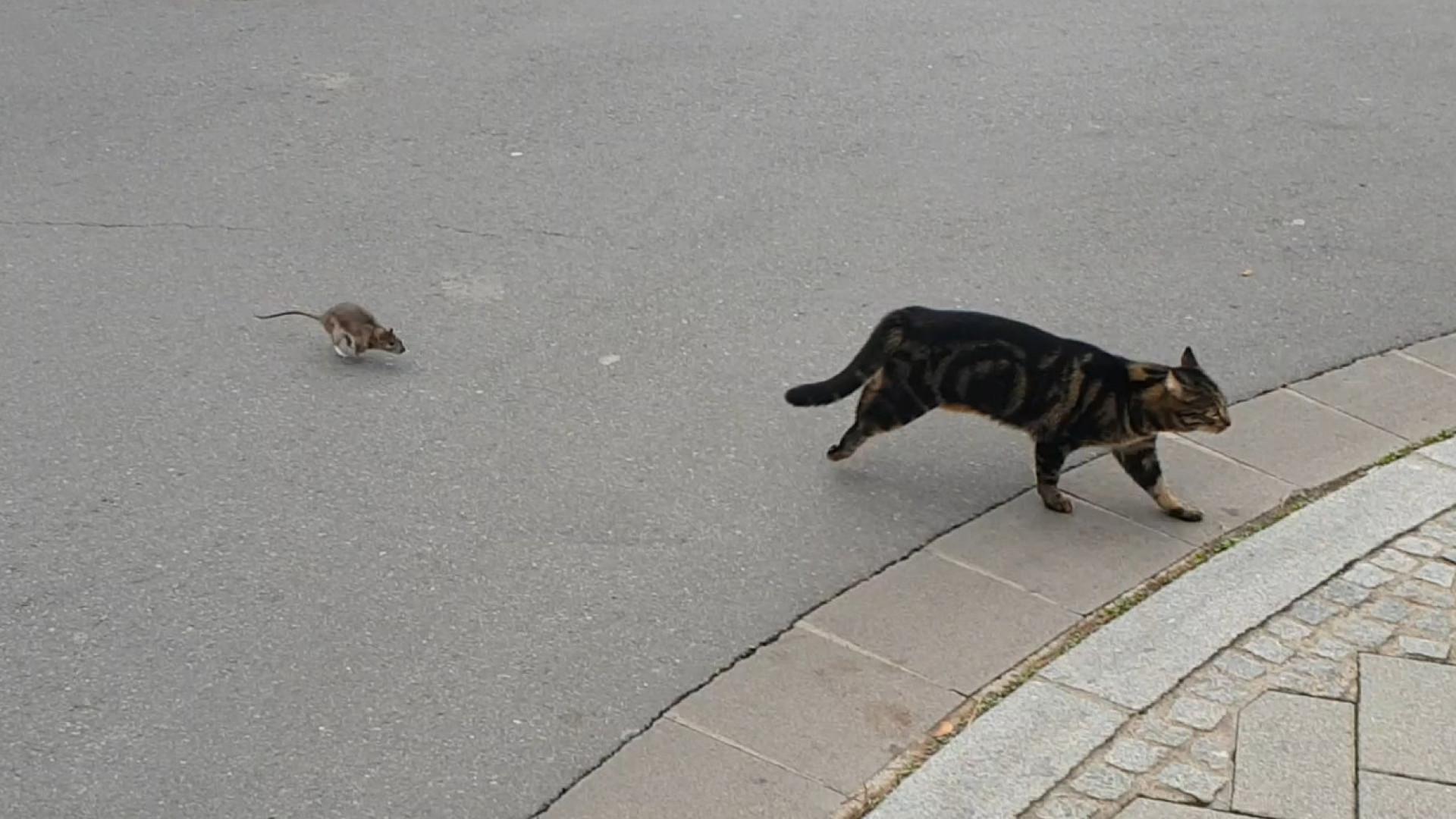 Rato mostra a gato quem realmente manda