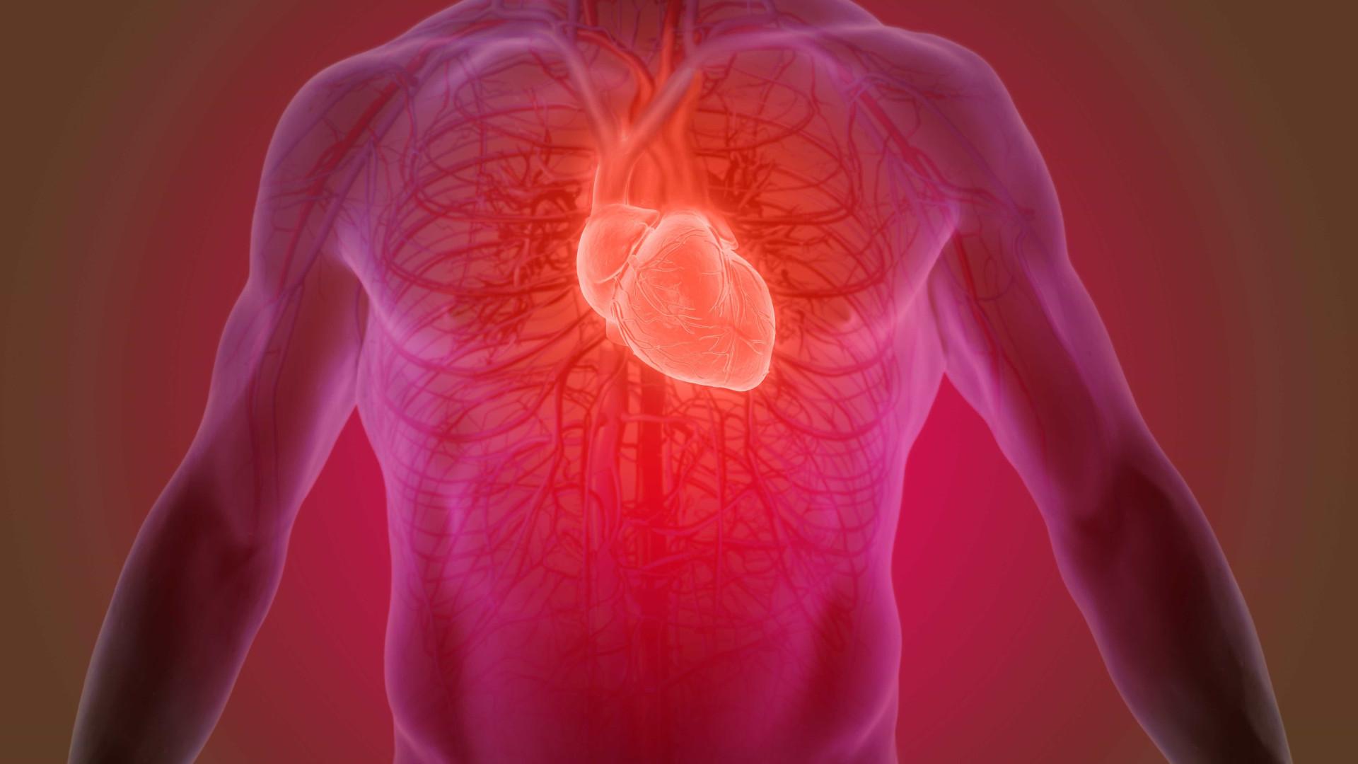 Conheça 10 exames que ajudam a prevenir doenças cardíacas