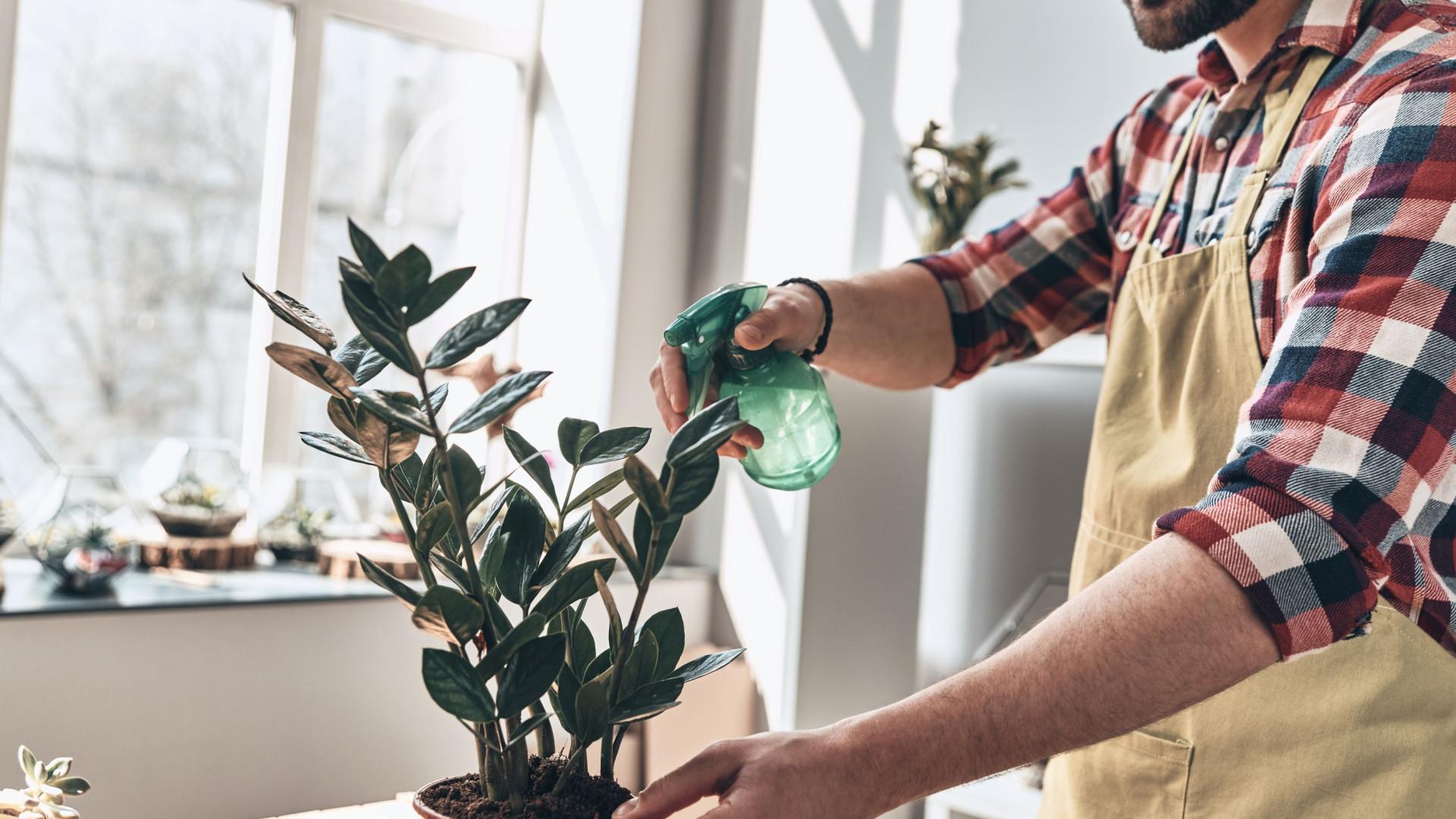 Pandemia e isolamento aumentam procura por cultivo de plantas em casa