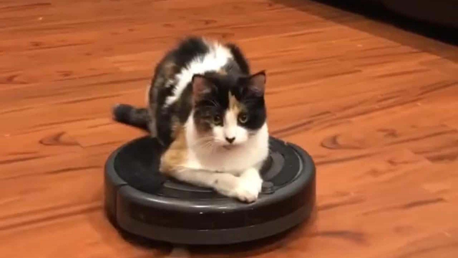 Gato adora passear pela casa em cima de aspirador automático