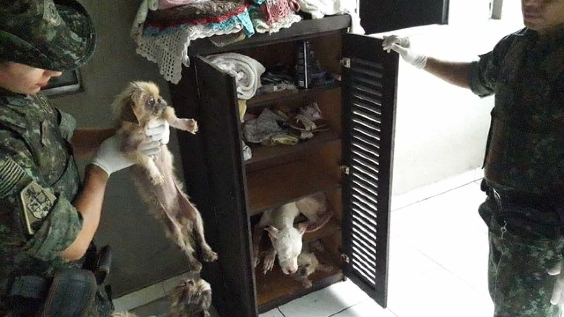 Mulher é multada em R$ 54 mil por maltratar 18 cães em SP