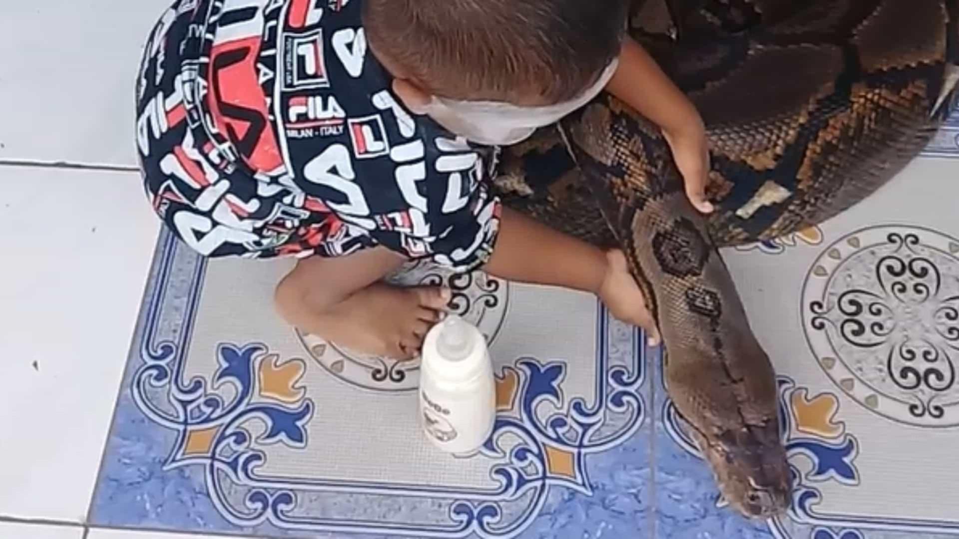De arrepiar: criança brinca com cobra gigante; assista