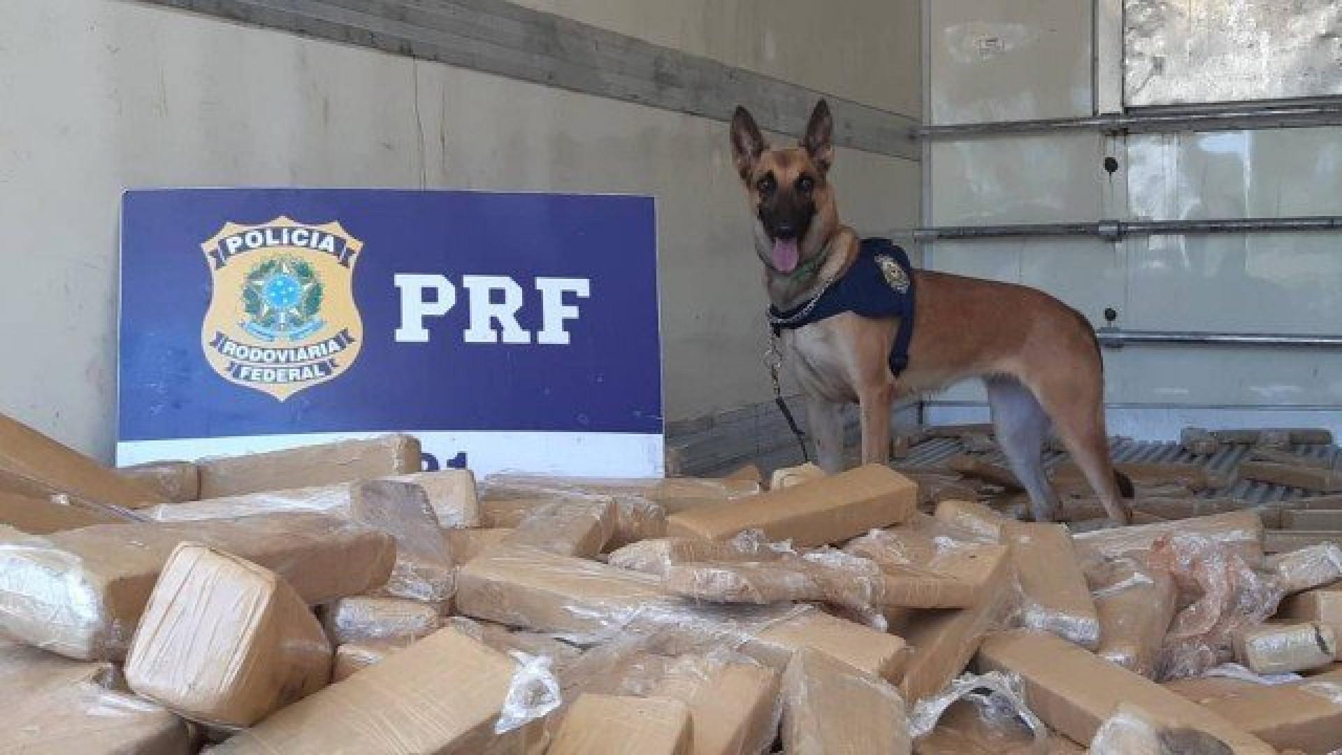 Mais de 4,6 toneladas de maconha são apreendidas pela PRF no Paraná