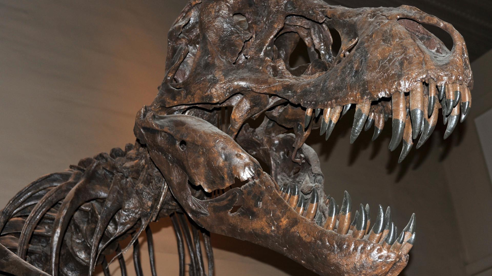 Paleontólogos descobrem novo dinossauro, um Tiranossauro rex 'anão'