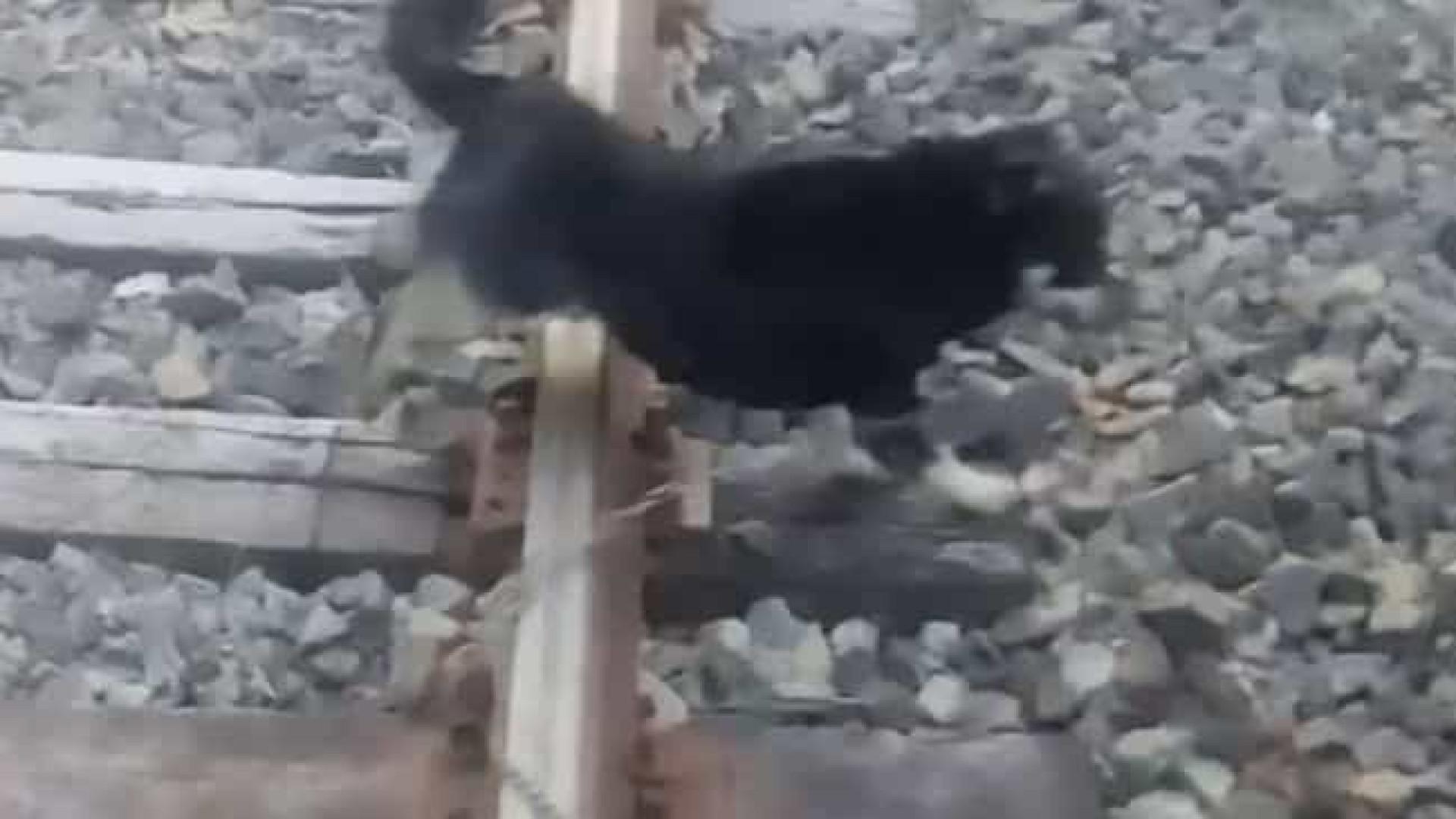 Operador de trem faz parada de emergência para salvar cão preso à linha