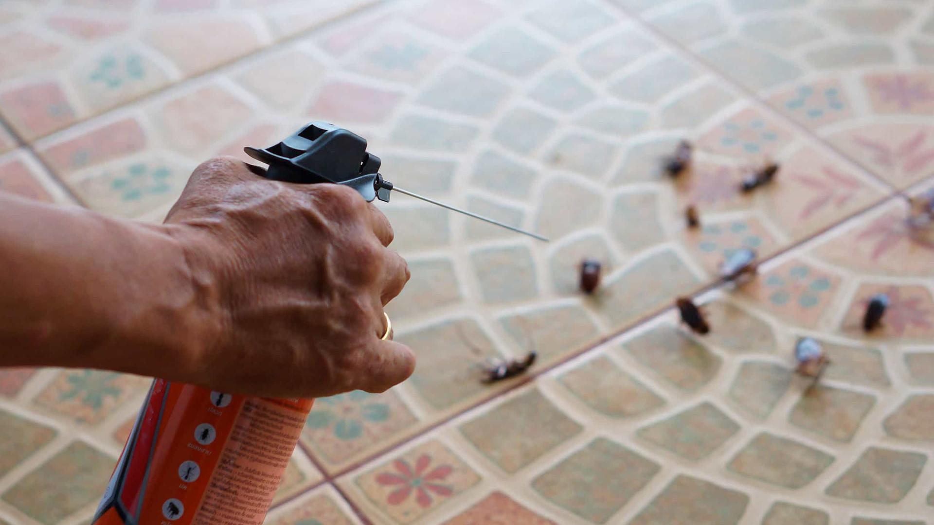 Baratas estão se tornando imunes a inseticidas, diz estudo