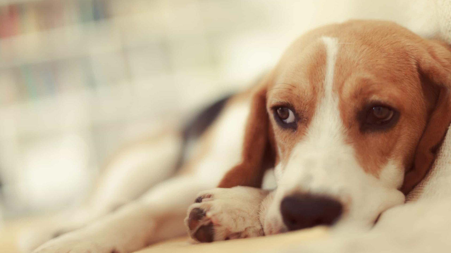 Antes de dormir, cães também ficam preocupado com problemas do dia