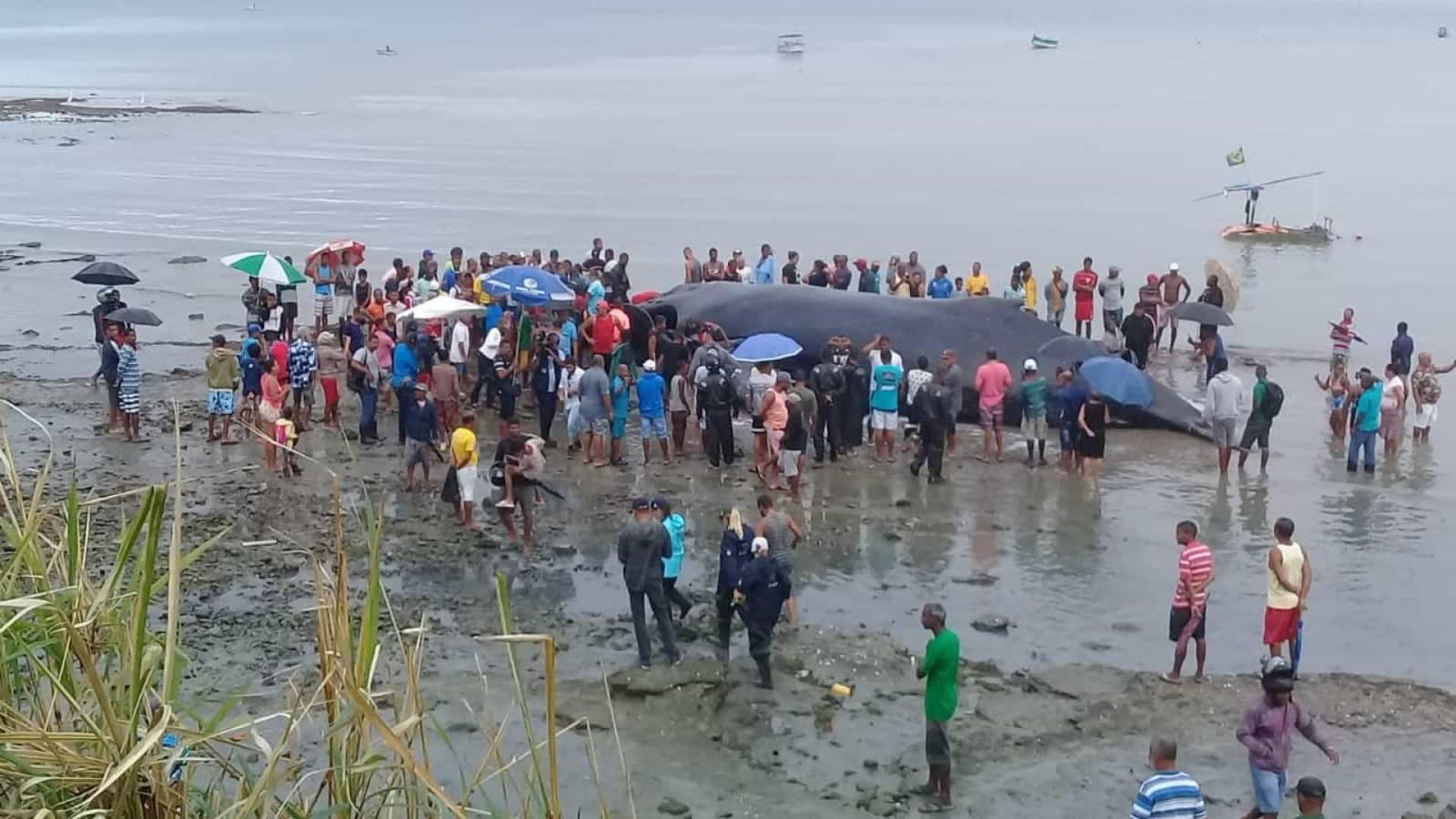 Moradores fazem churrasco de baleia que morreu ao encalhar em Salvador