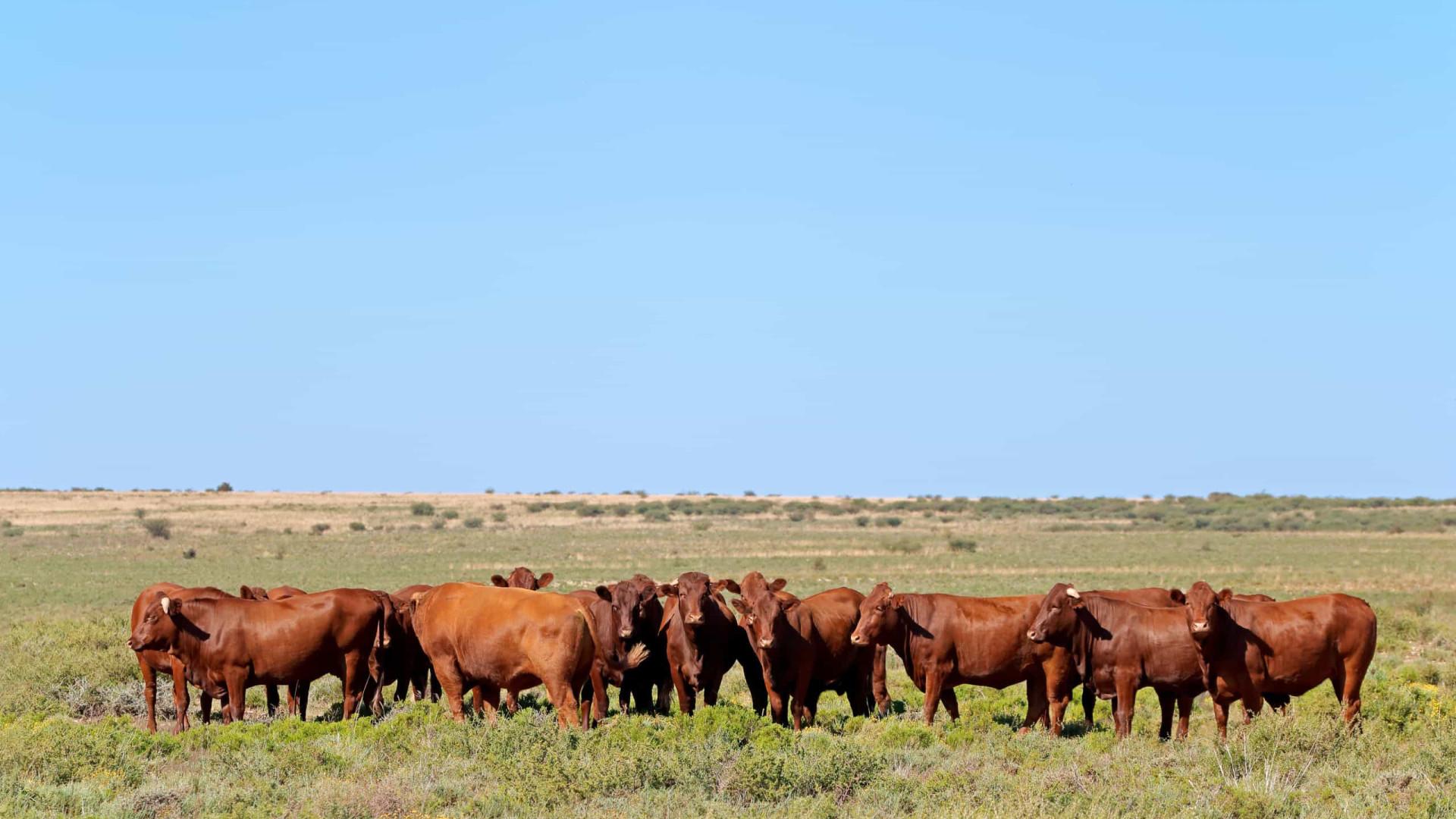 Brasil e Alemanha firmam acordo para apoiar agropecuária sustentável