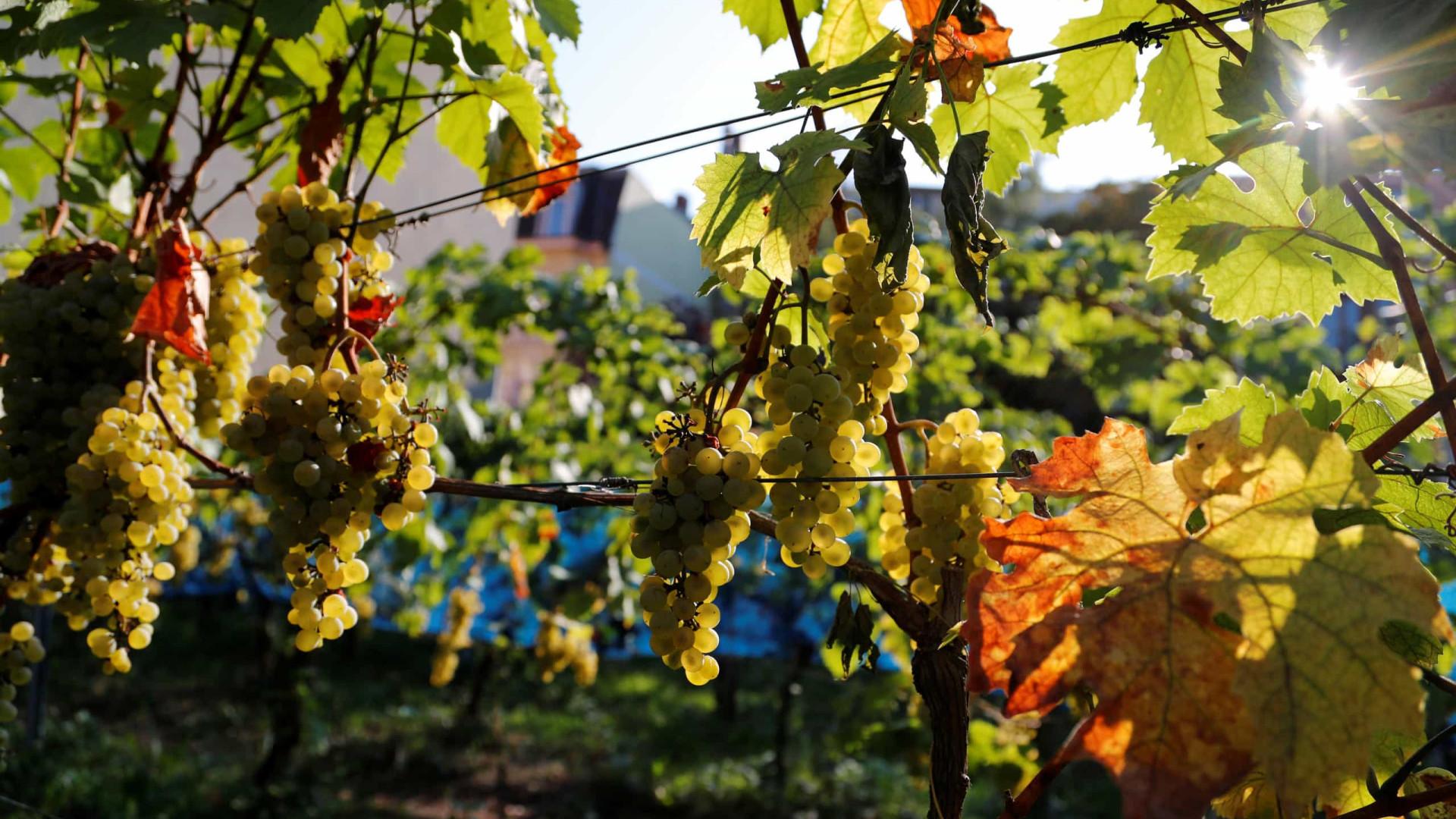 Agricultura: Brasil autoriza importação de uva e alho do Egito