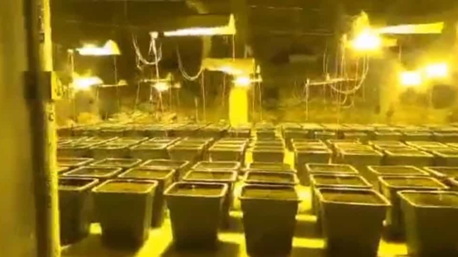 Polícia italiana descobre plantação de canabis atrás de chuveiro