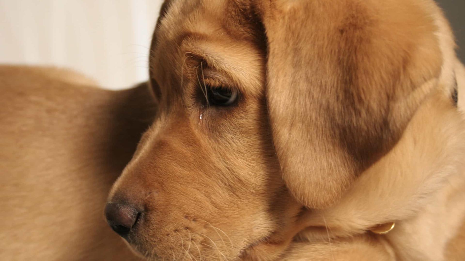 O que significa, realmente, o choro de um cão