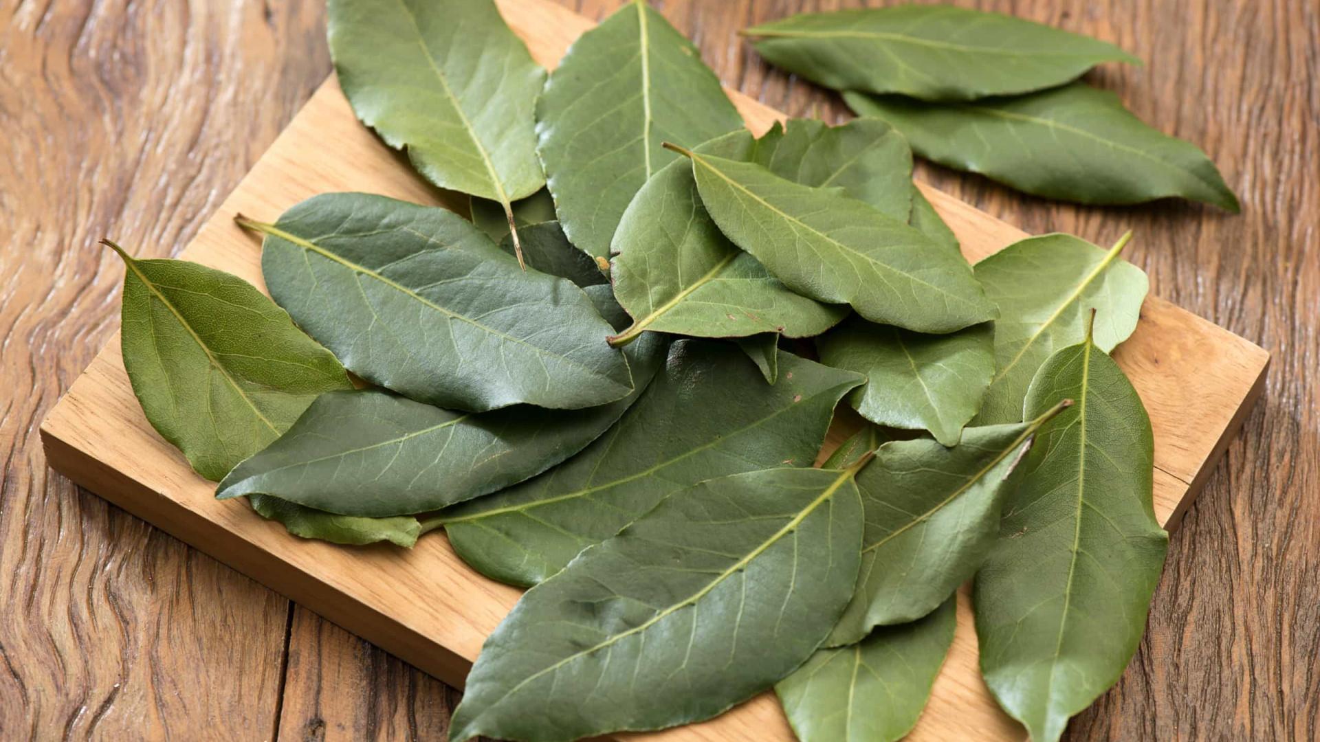 Saiba o que o chá de folha de louro pode fazer por sua saúde
