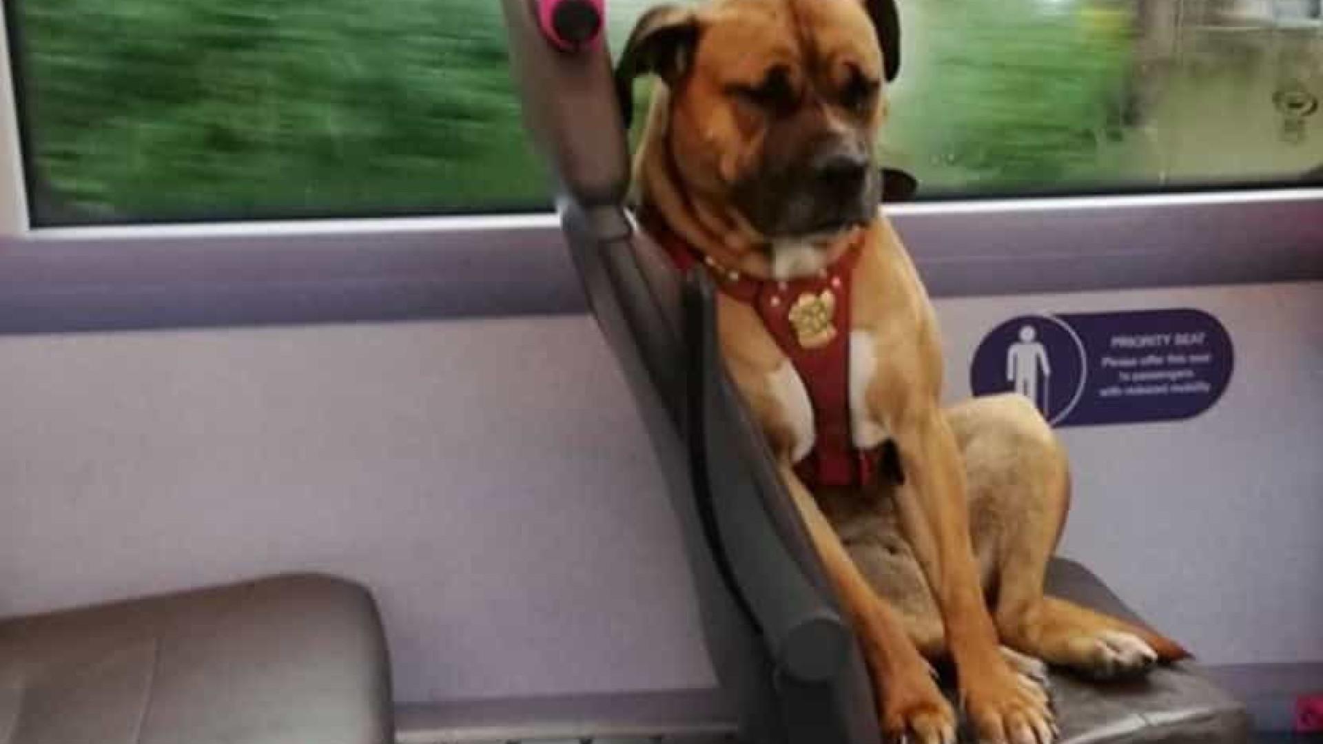 Imagem de cadela sentada em ônibus é viral. Donos não apareceram