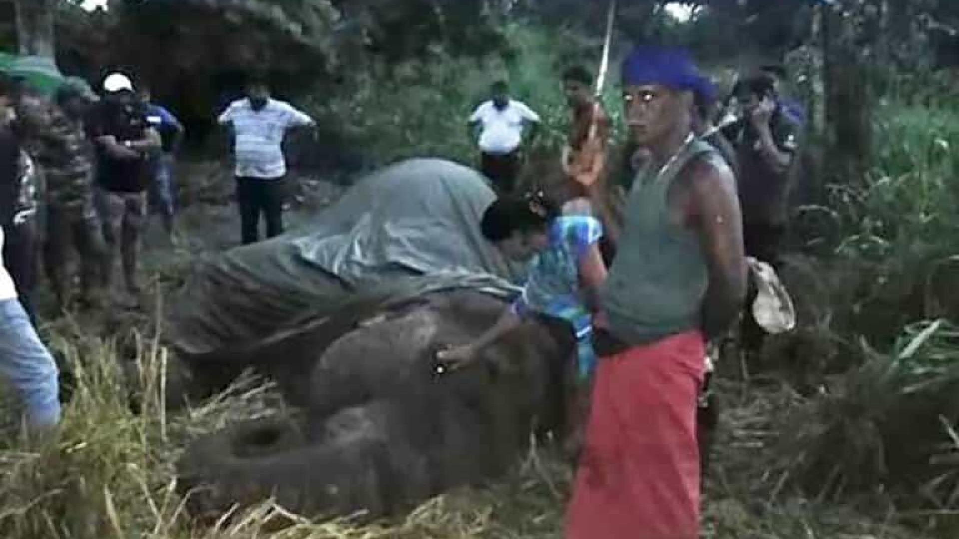 Elefante colapsa e morre após carregar turistas no Sri Lanka