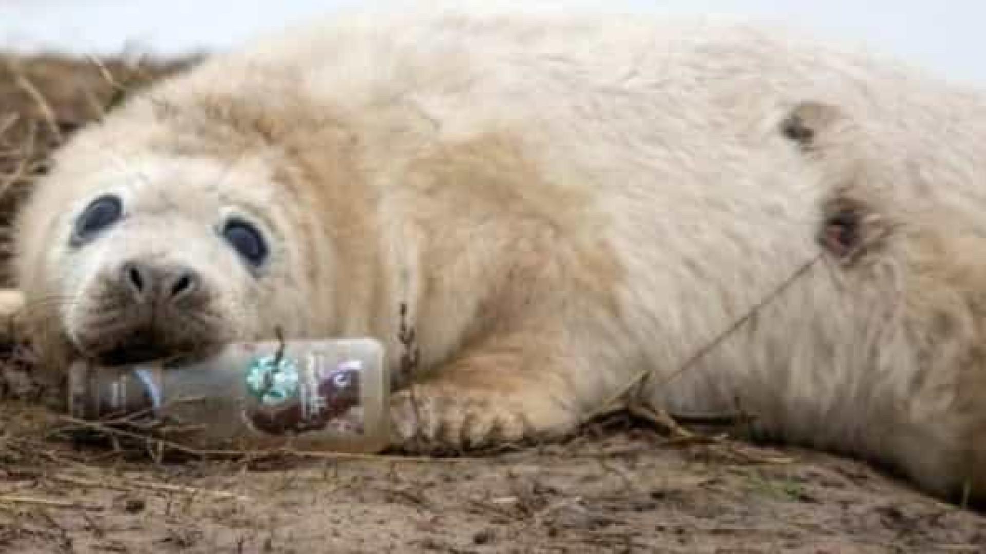 Imagem de foca com garrafa na boca ilustra impacto do lixo no mar