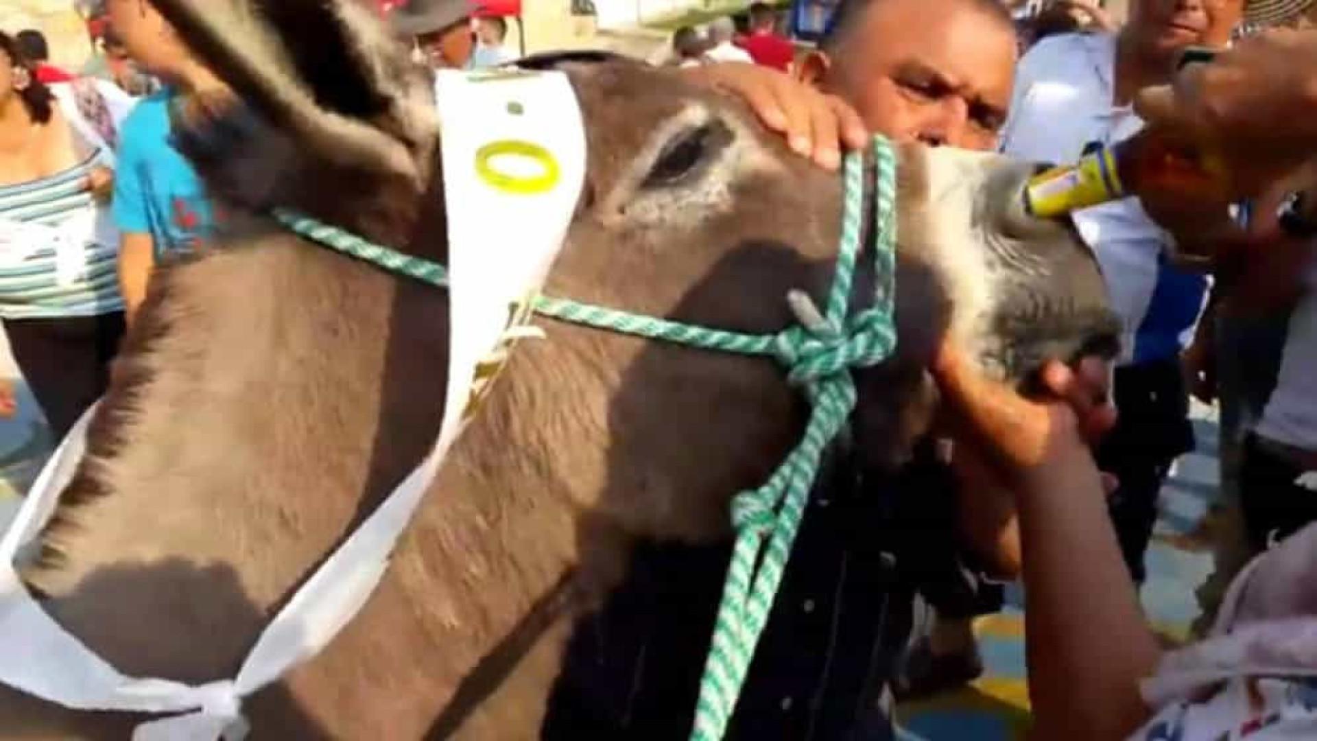 Dona obriga burro a beber cerveja pelo nariz e causa indignação