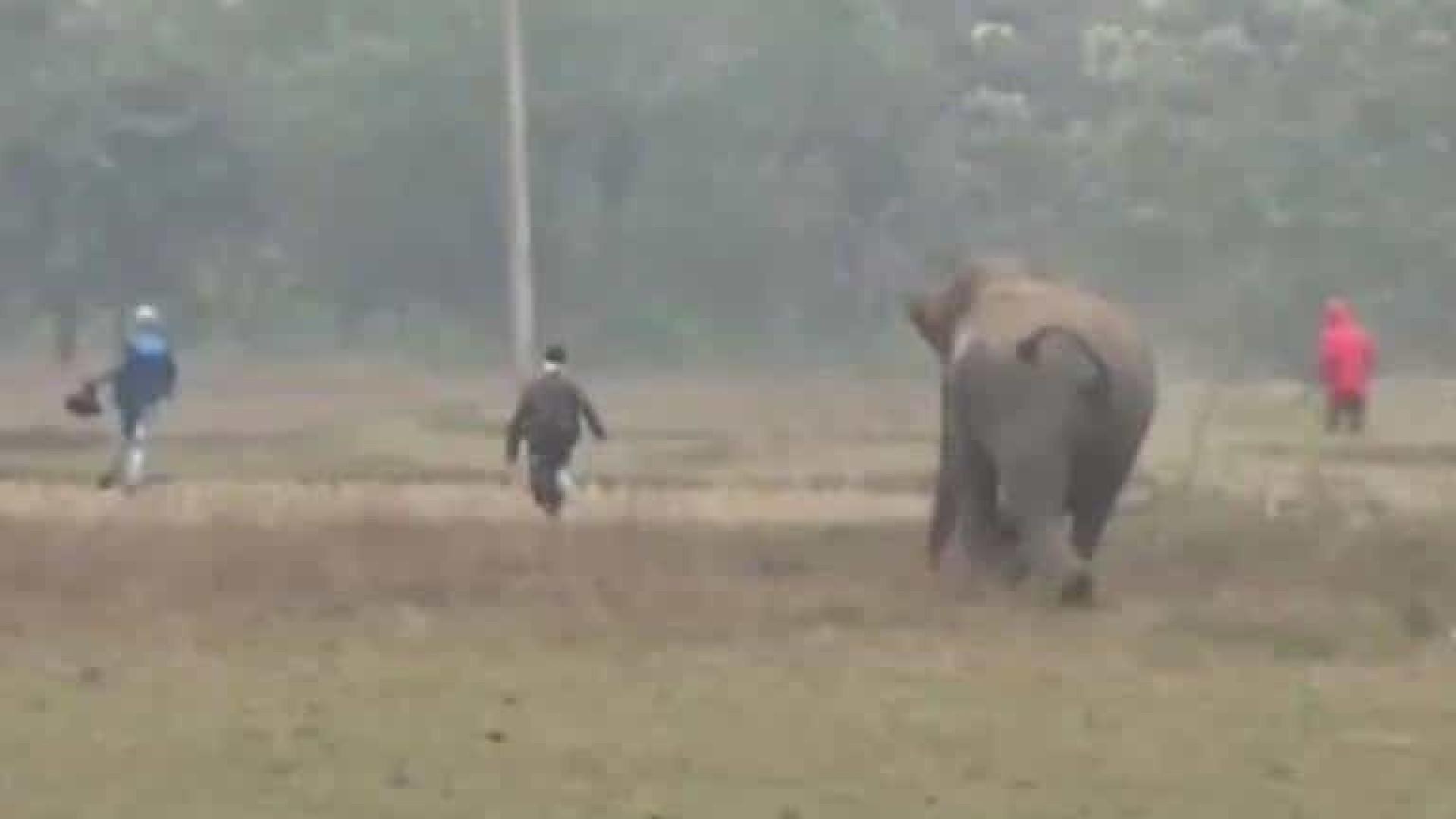 Homens são perseguidos por elefante após tentar tirar selfie com animal