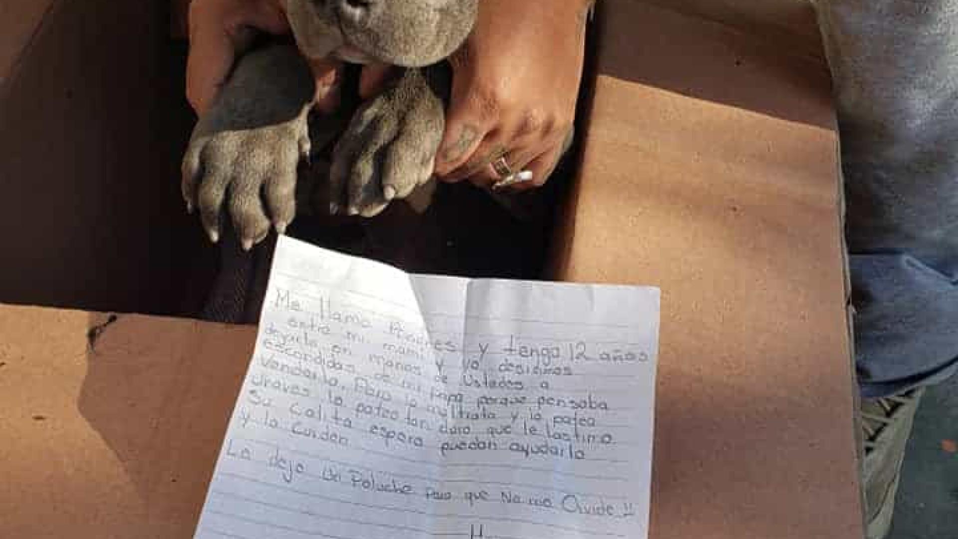 Menino deixa cão em associação porque o pai maltratava o animal