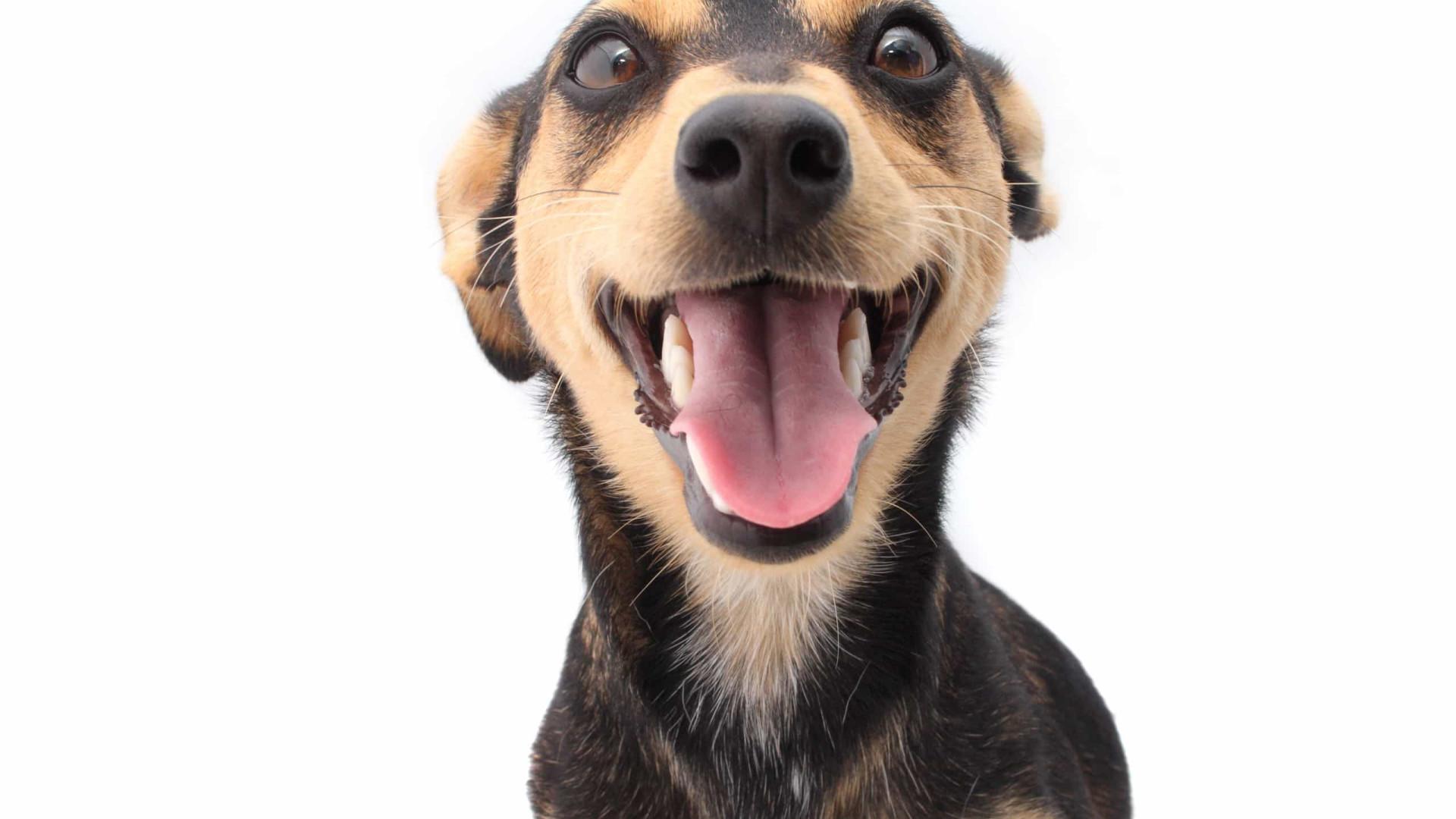 O seu cão é muito ansioso? O que pode estar a causar este comportamento