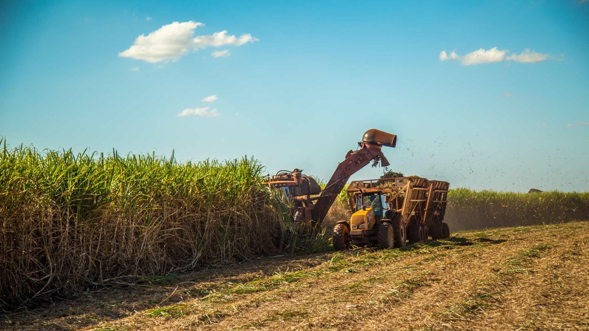 Cana perde espaço na lavoura para soja e milho