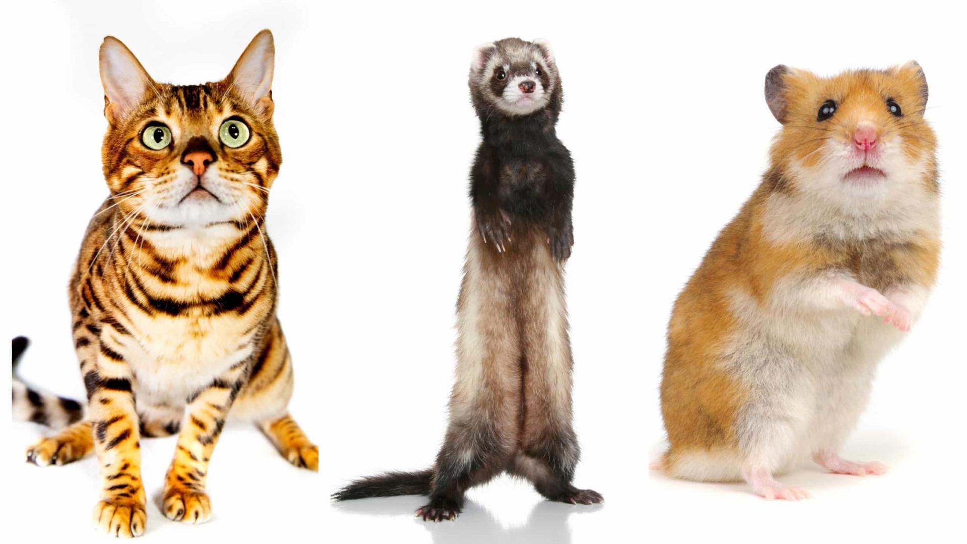Animais de estimação ilegais: Do surpreendente ao óbvio