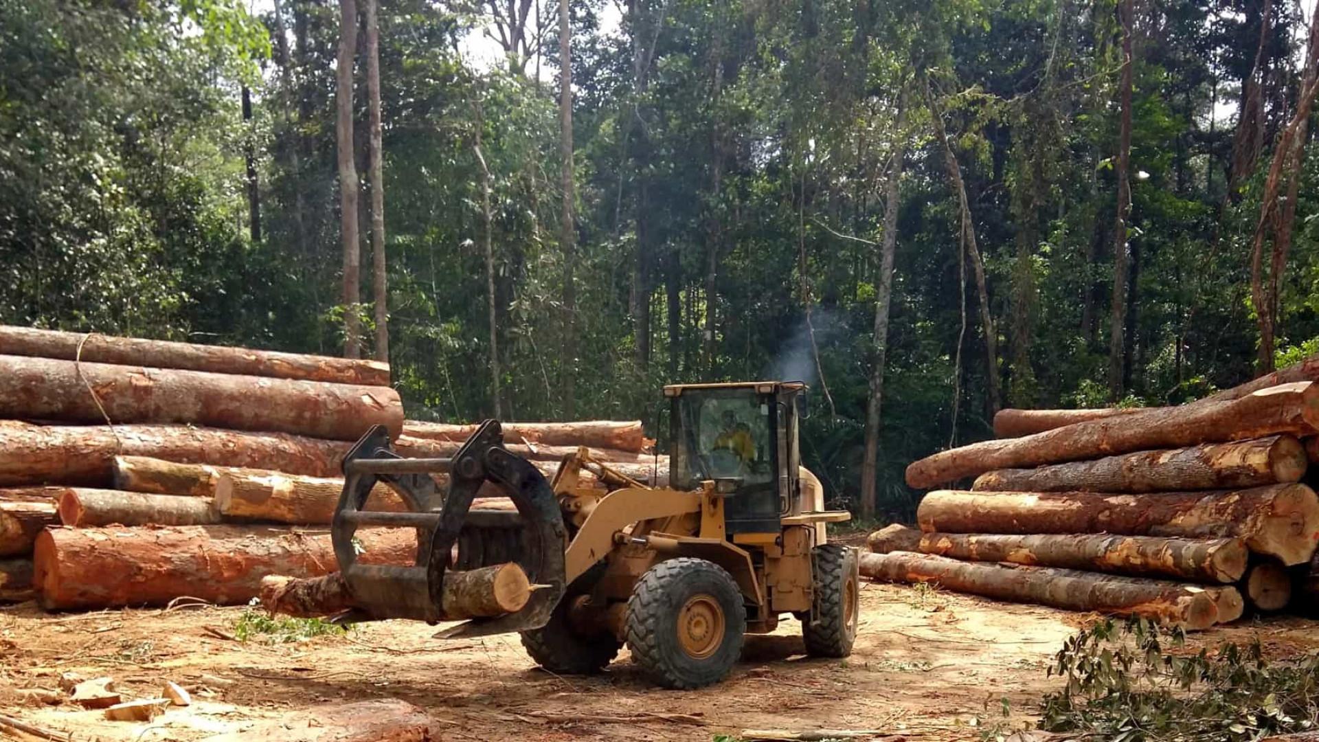 Juíza manda devolver cargas de madeira que PF confiscou em operação no Amazonas
