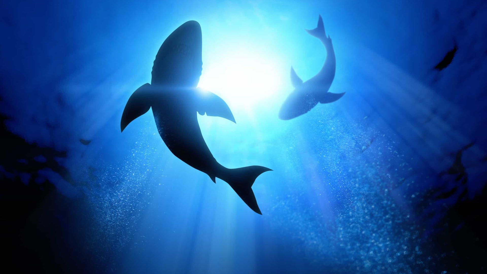 Tubarão puxa garoto de 10 anos de dentro de barco na Austrália