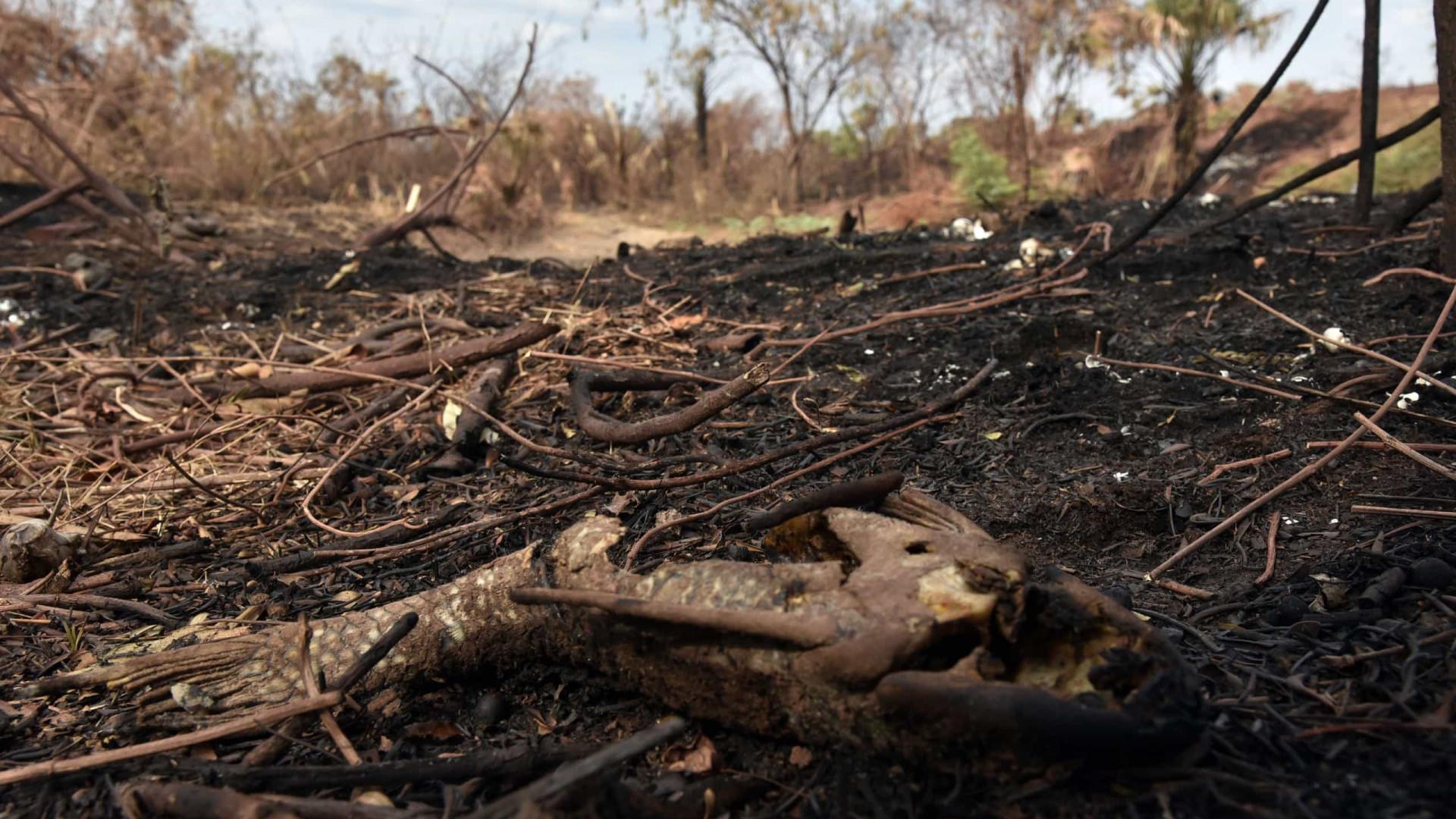 Forças Armadas reforçam combate a incêndios no Pantanal