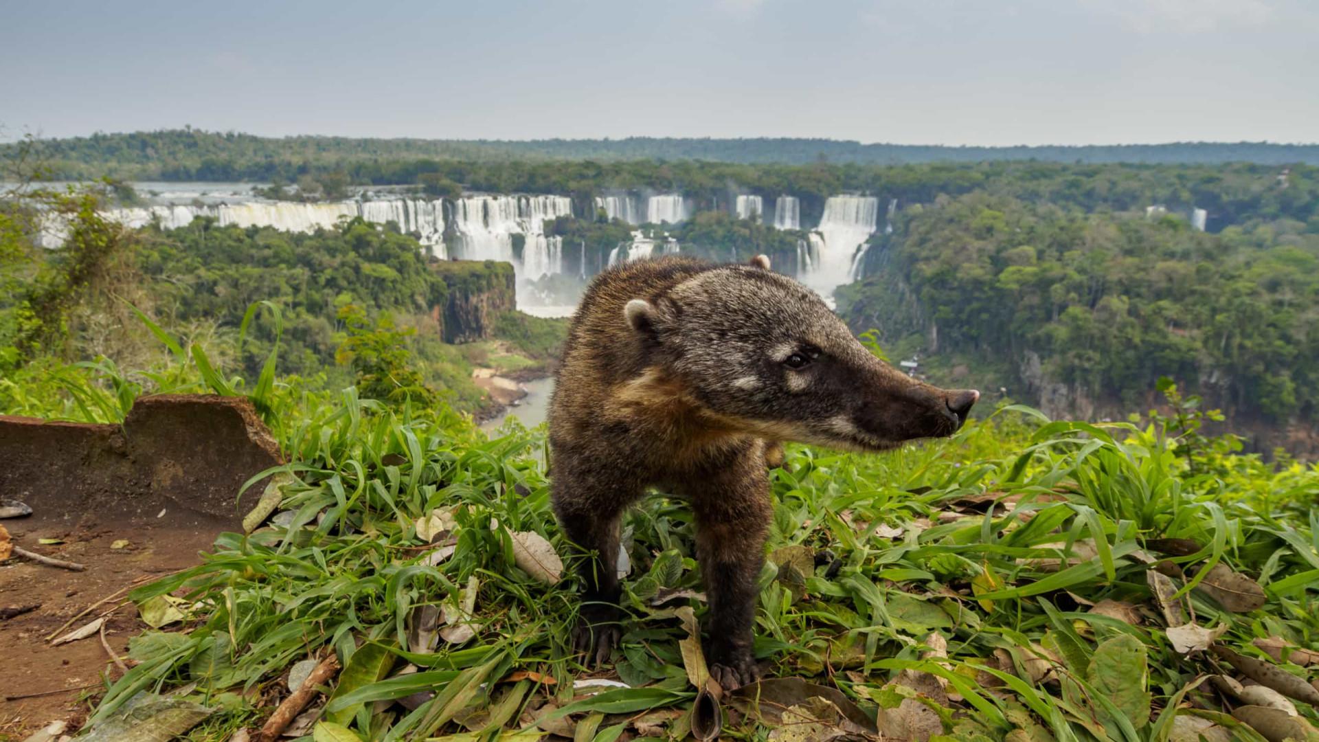 Parque Nacional do Iguaçu retoma atividades a partir dehoje