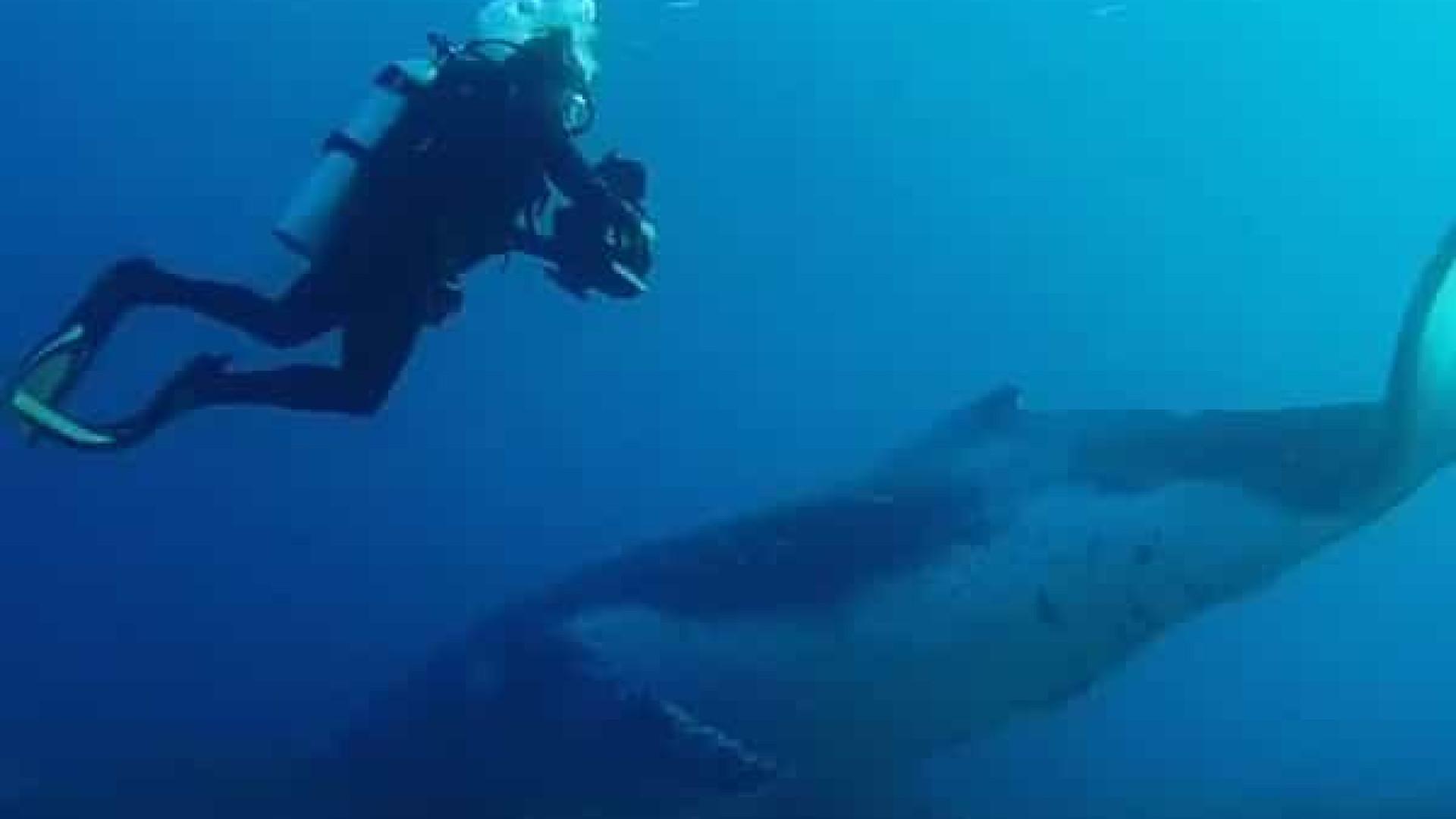 """Grande barreira de coral é palco de """"encontro raro"""" com baleia"""