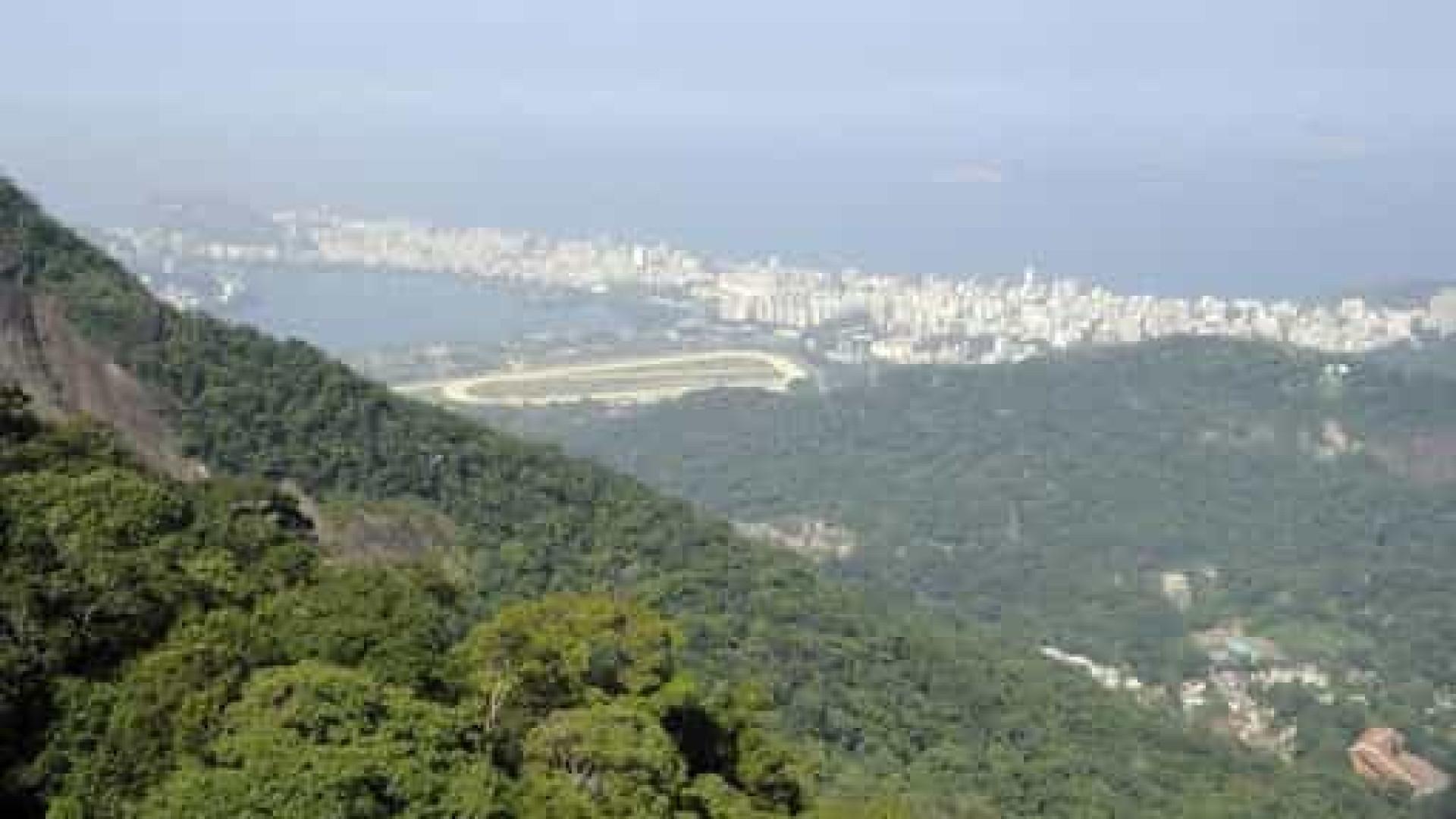 Petrobras refloresta área de Mata Atlântica no polo de gás de Itaboraí