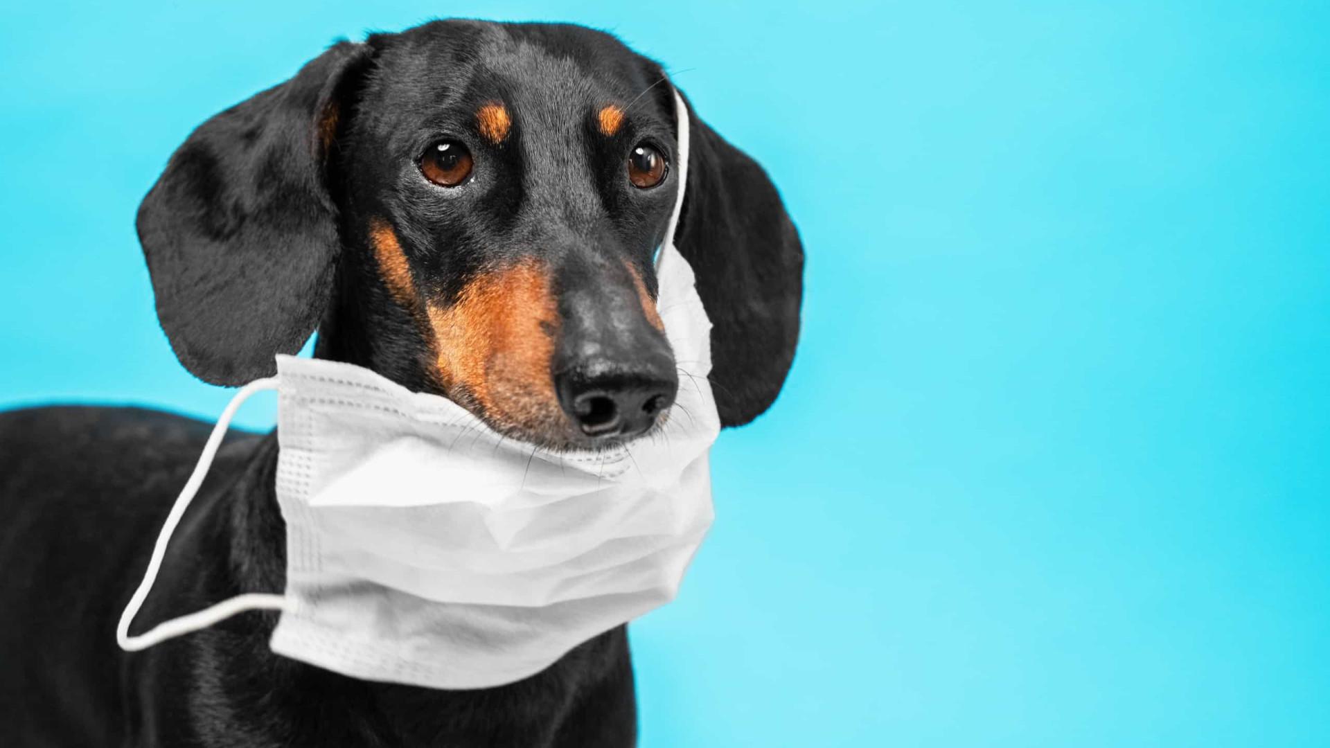 Covid-19 causa problemas respiratórios em cães e gatos, alerta estudo