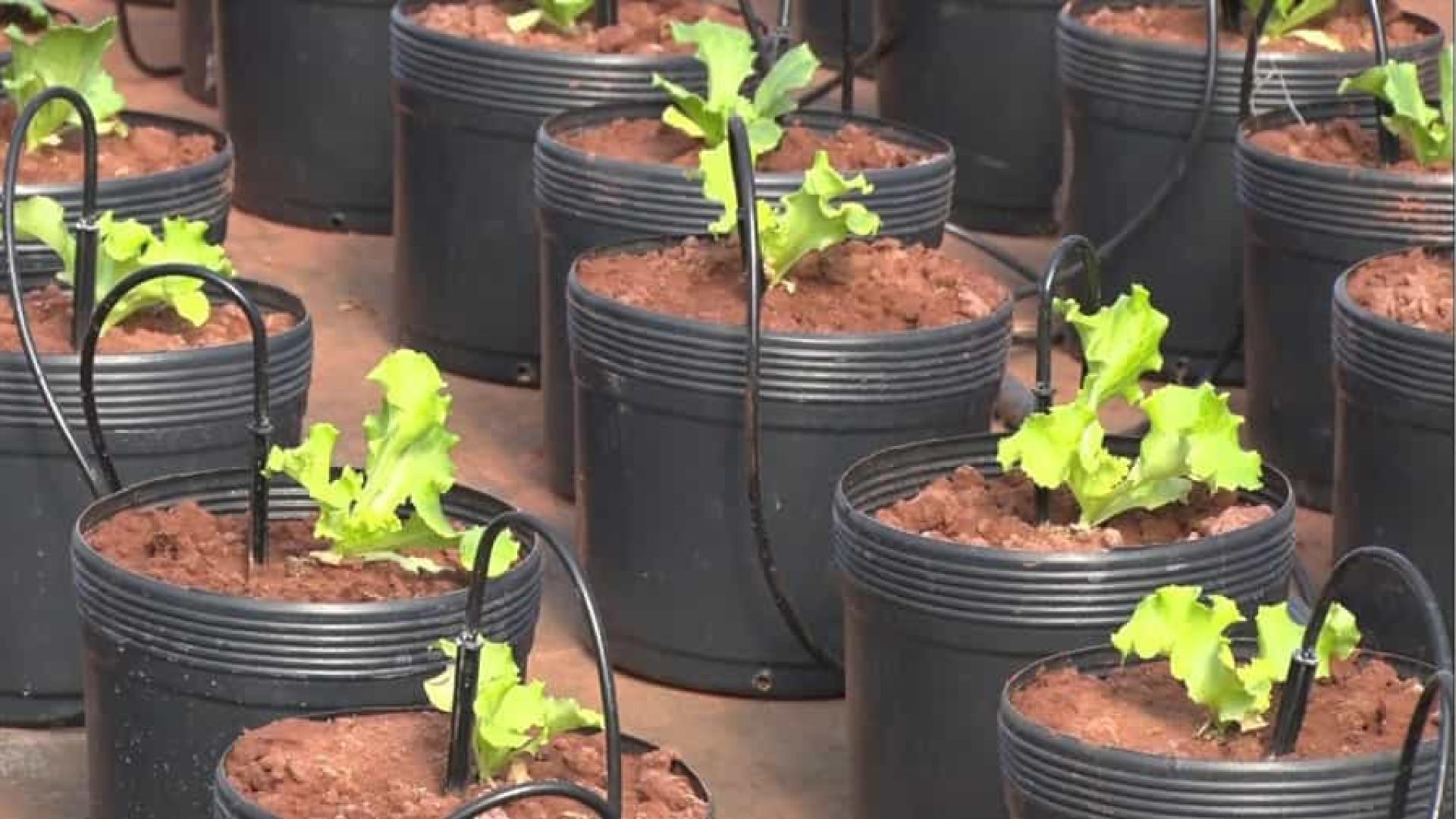 Pesquisadores desenvolvem técnicas para biofortificação de alimentos
