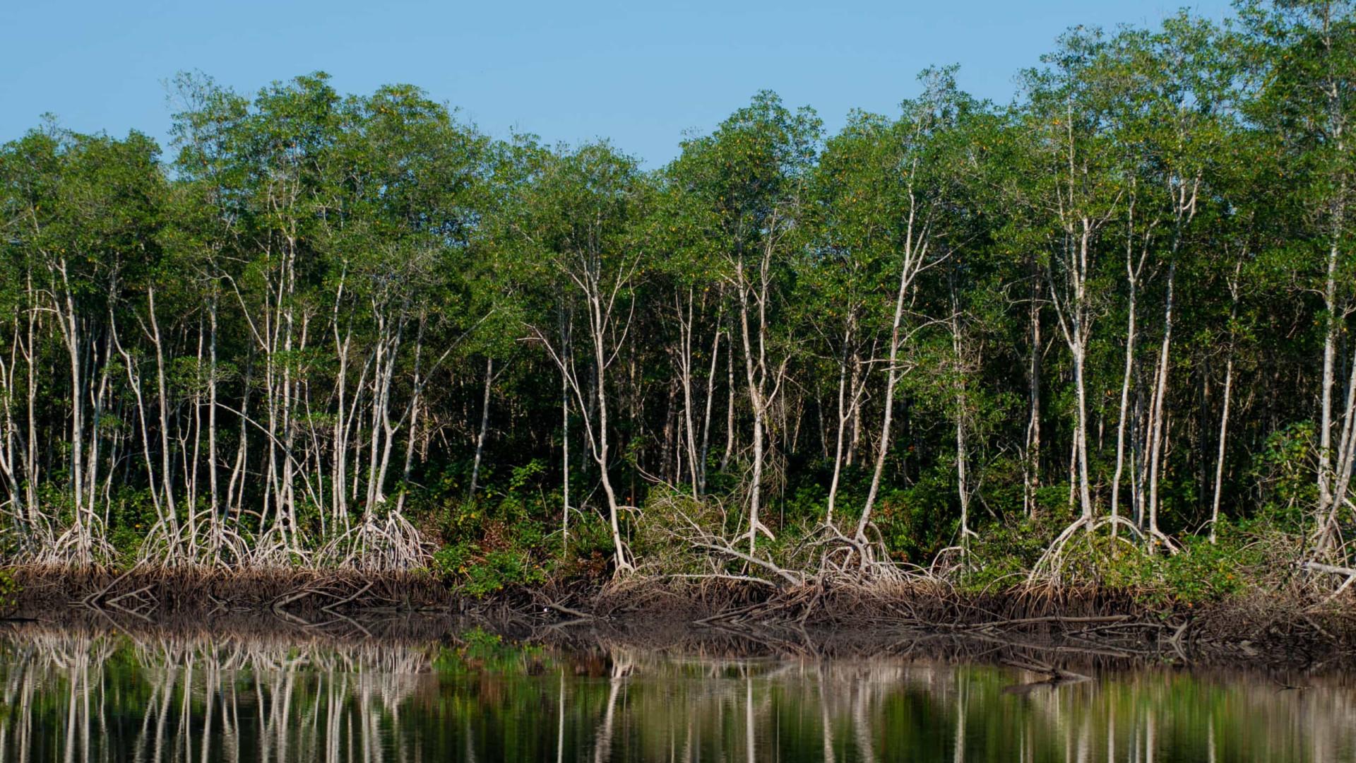 Conselho aprova extinção de regras que protegem manguezais e restingas