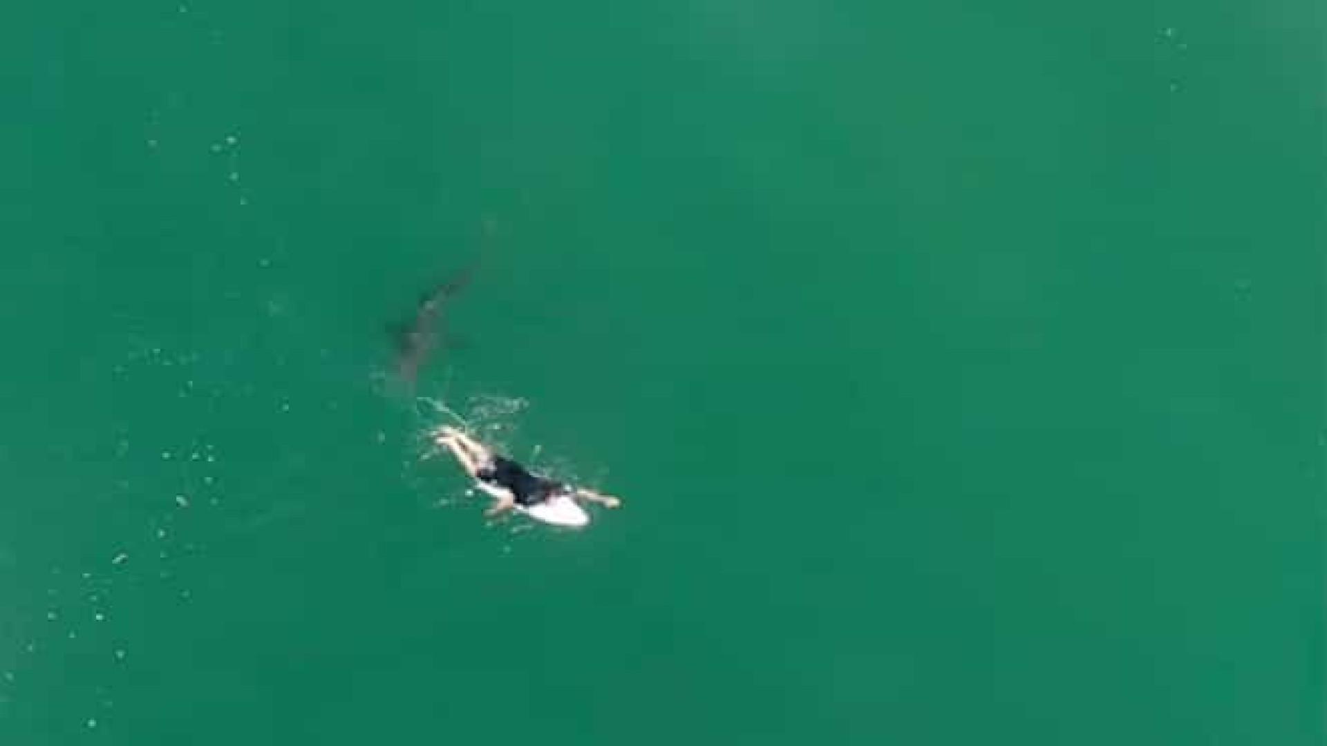 Drone 'salva' vida de surfista ao detectar um tubarão branco na água