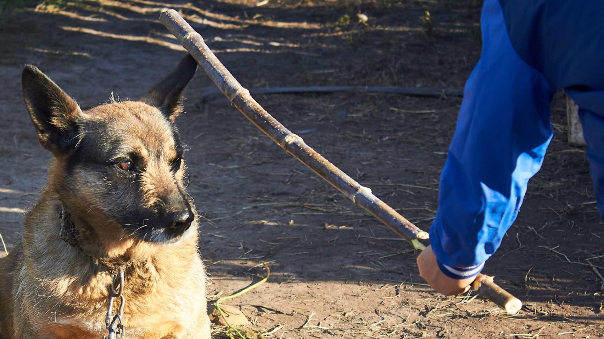 Homem é condenado a pagar 15 salários mínimos por maltratar cães em MG