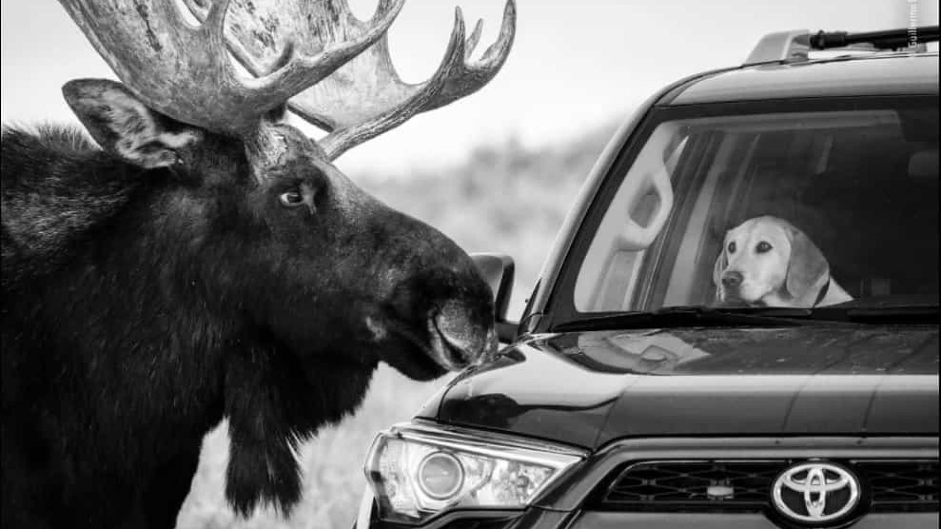 O belo, o mau e o vilão na vida selvagem em fotografias