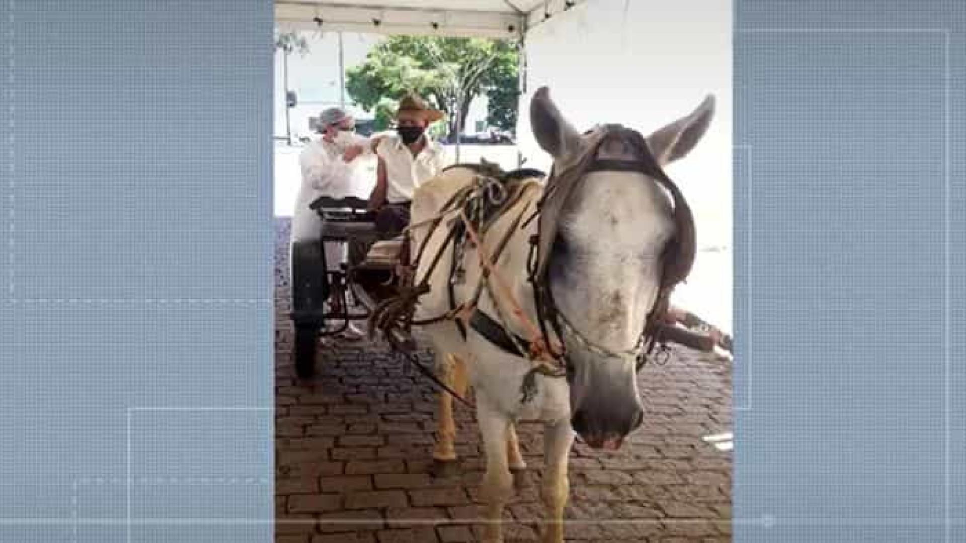Idoso surpreende ao chegar a drive-thru de vacinação em carroça