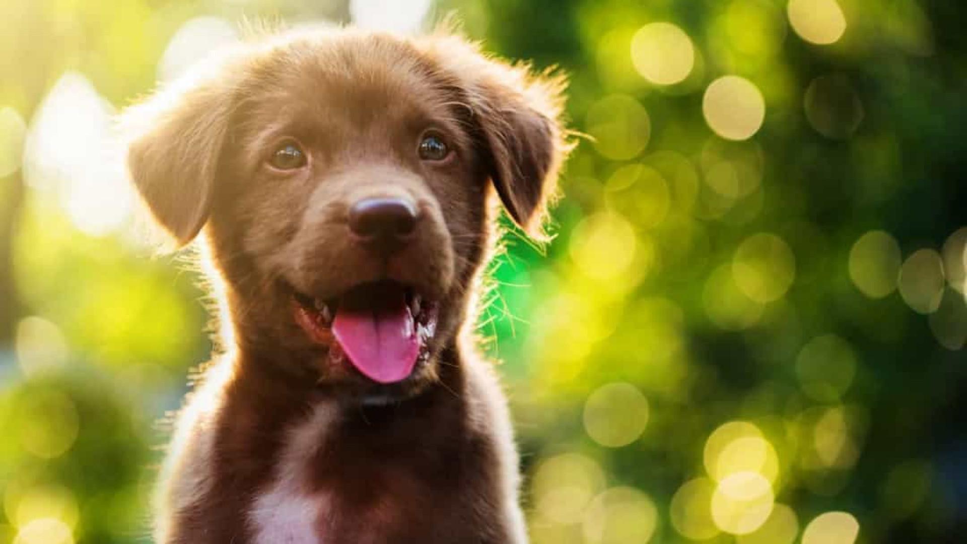 Indeciso? 100 ideias de nomes para cachorros!